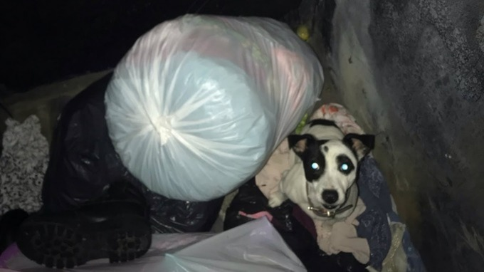 Dog in dumpster