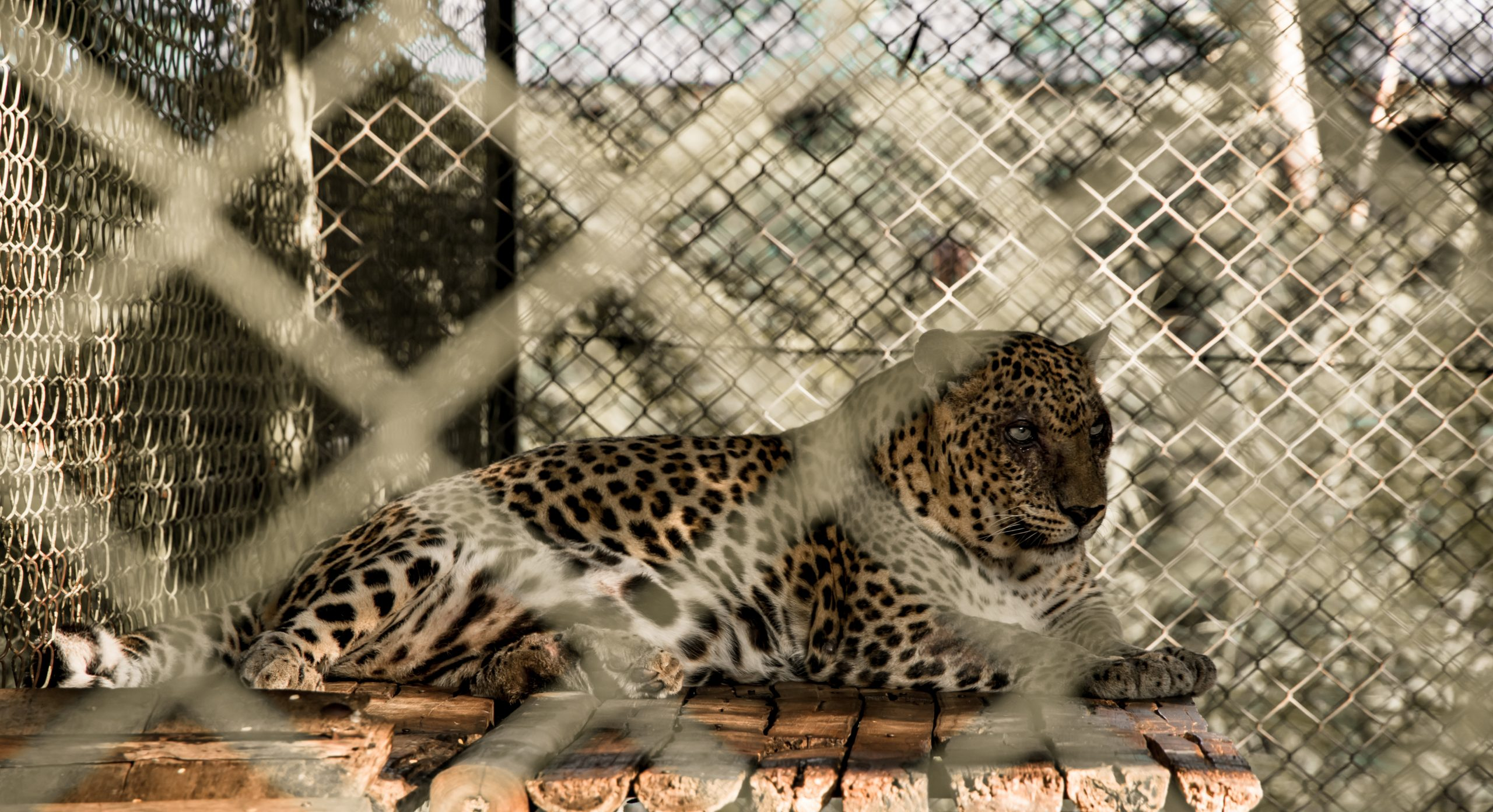 in cage at zoo