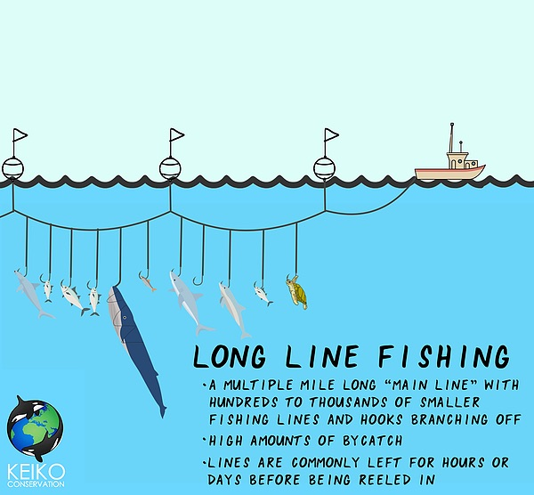 Graphic with facts about long line fishing