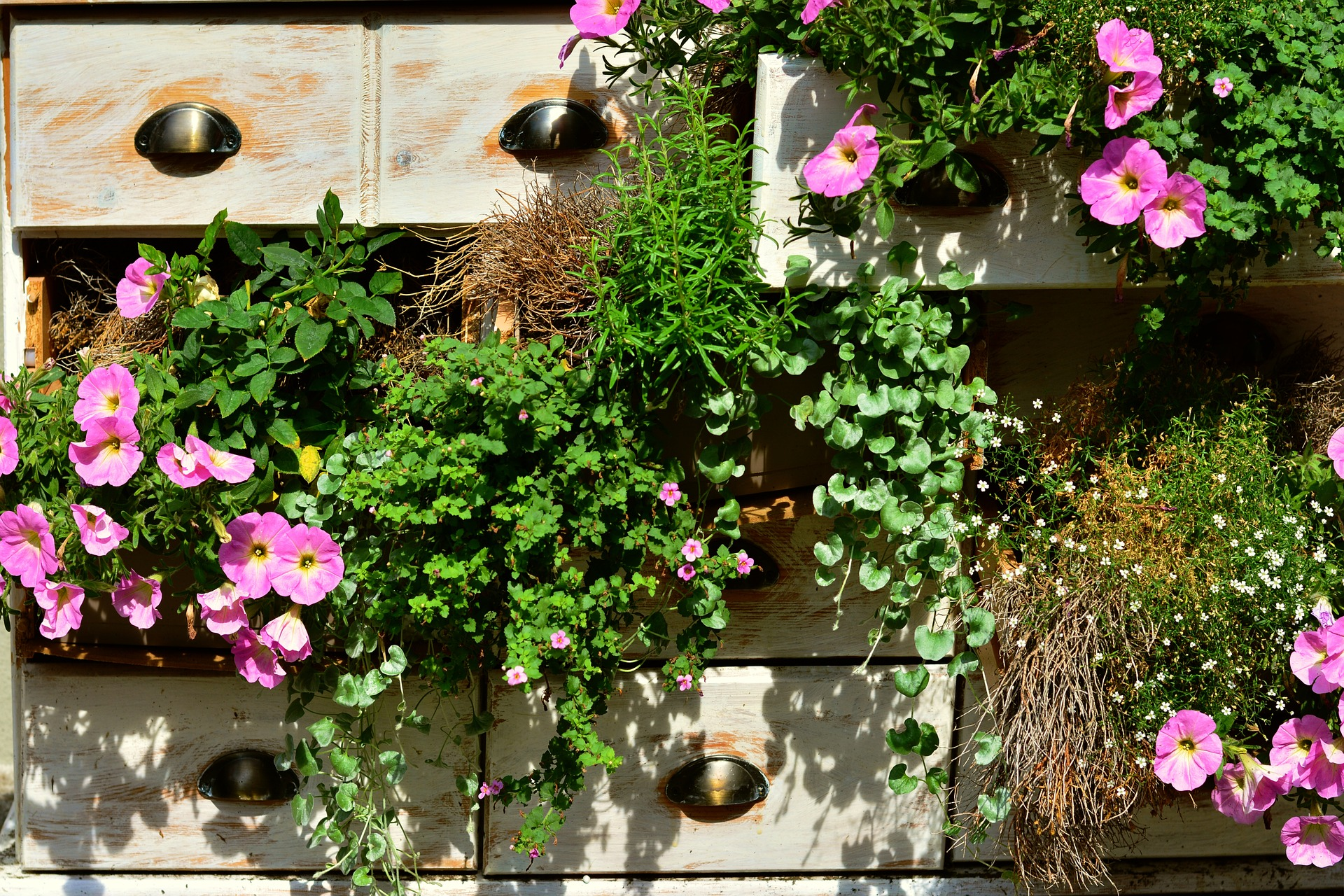 Drawers used as planters with petunias hanging from them