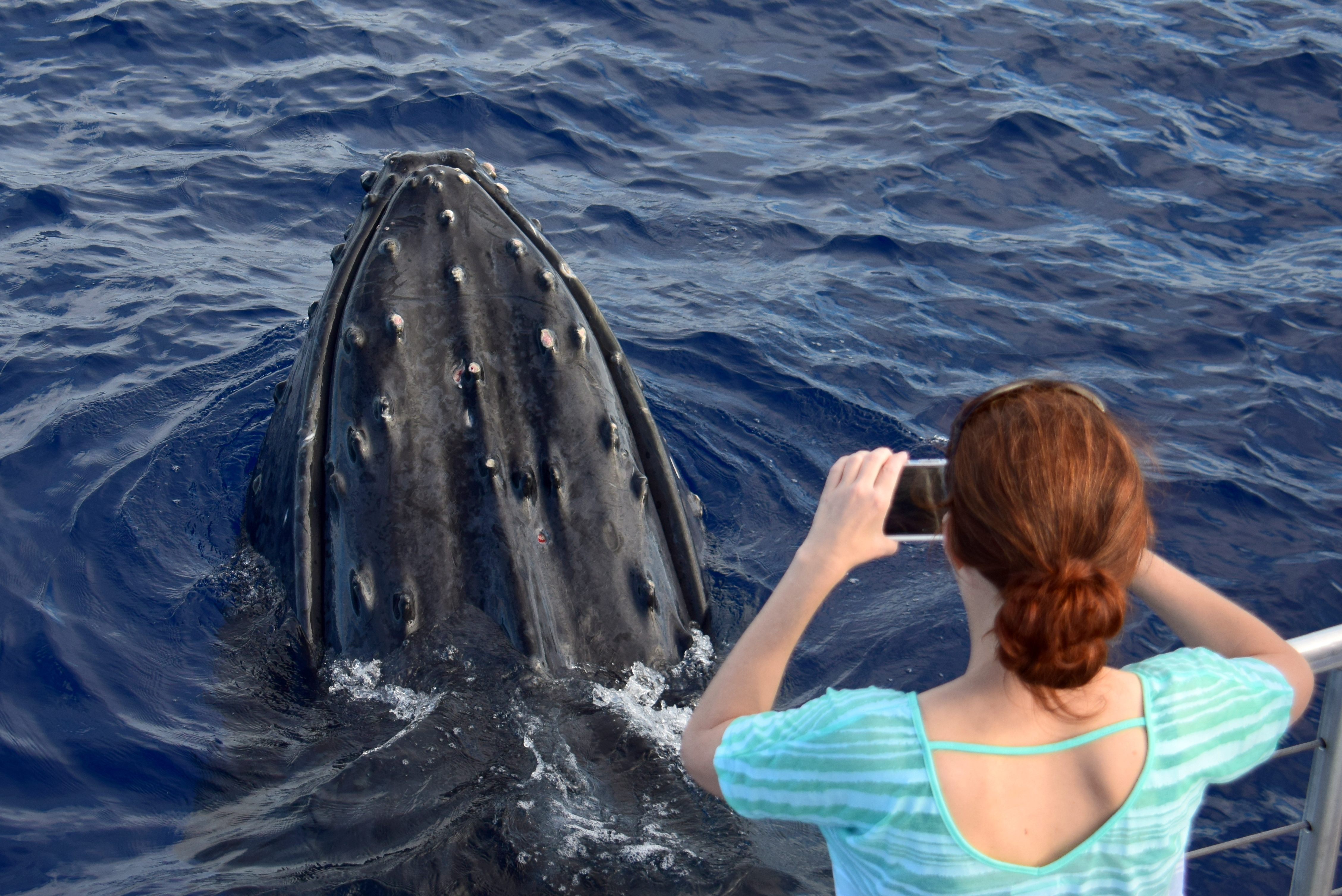 Whale watcher taking close-up photo of whale in water
