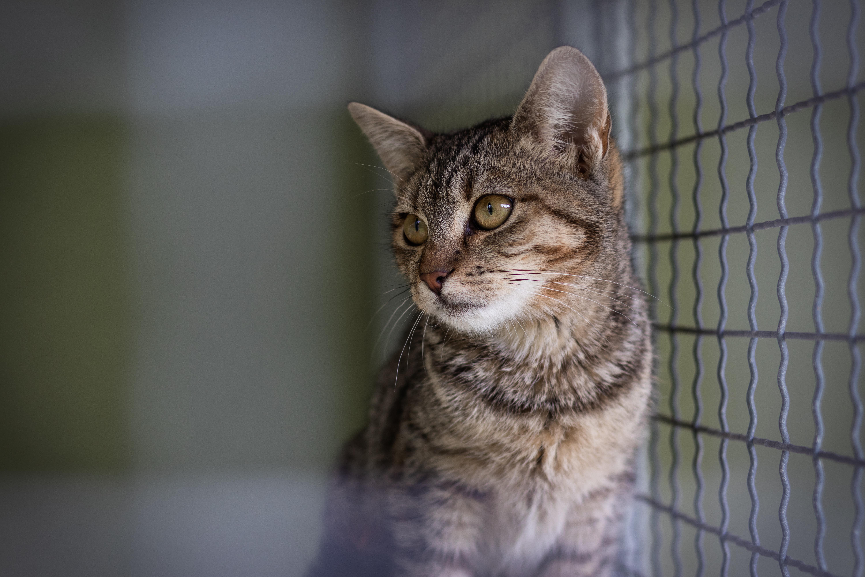 sad cat in cage