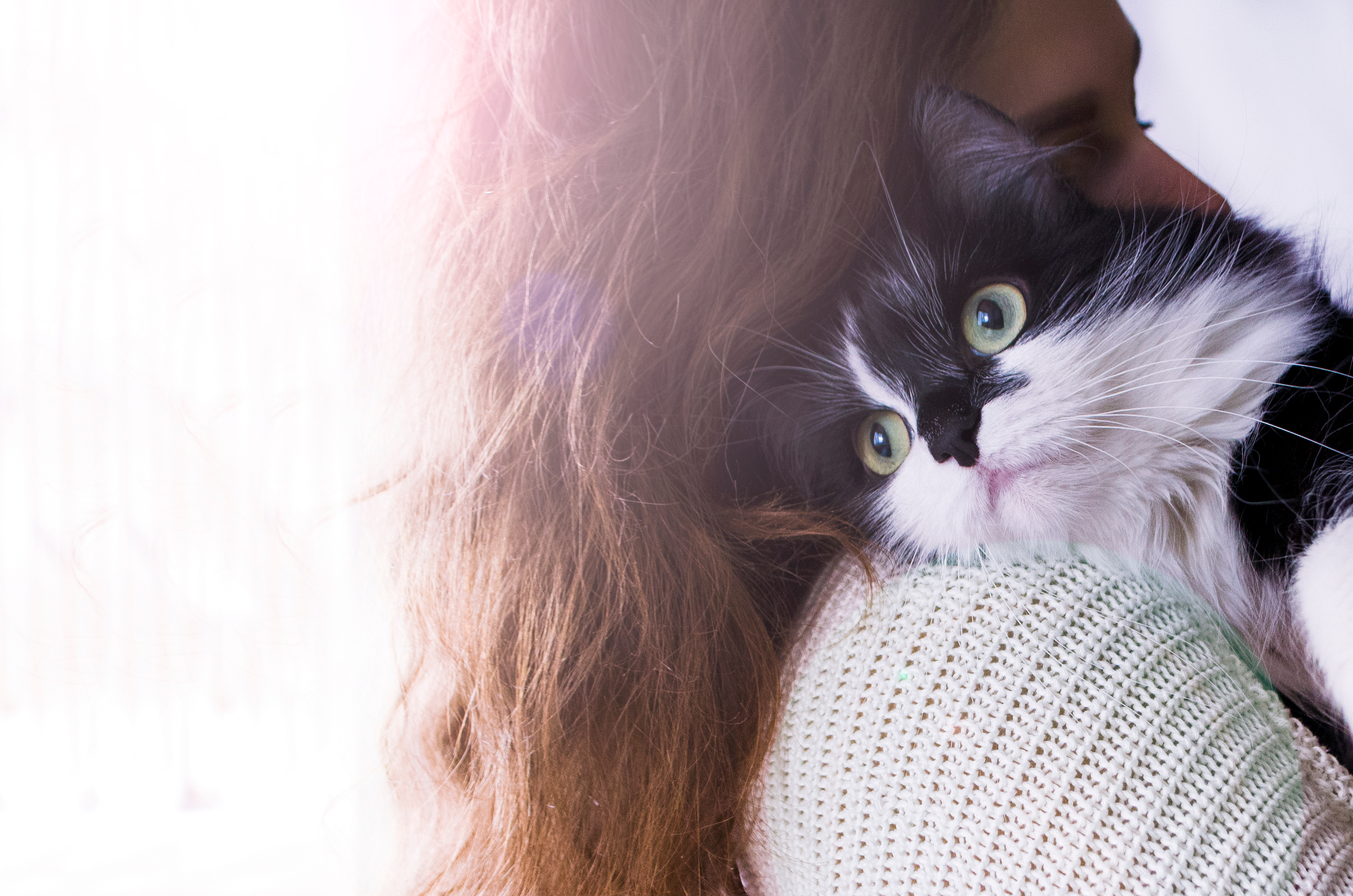 Cat lying on woman's shoulder