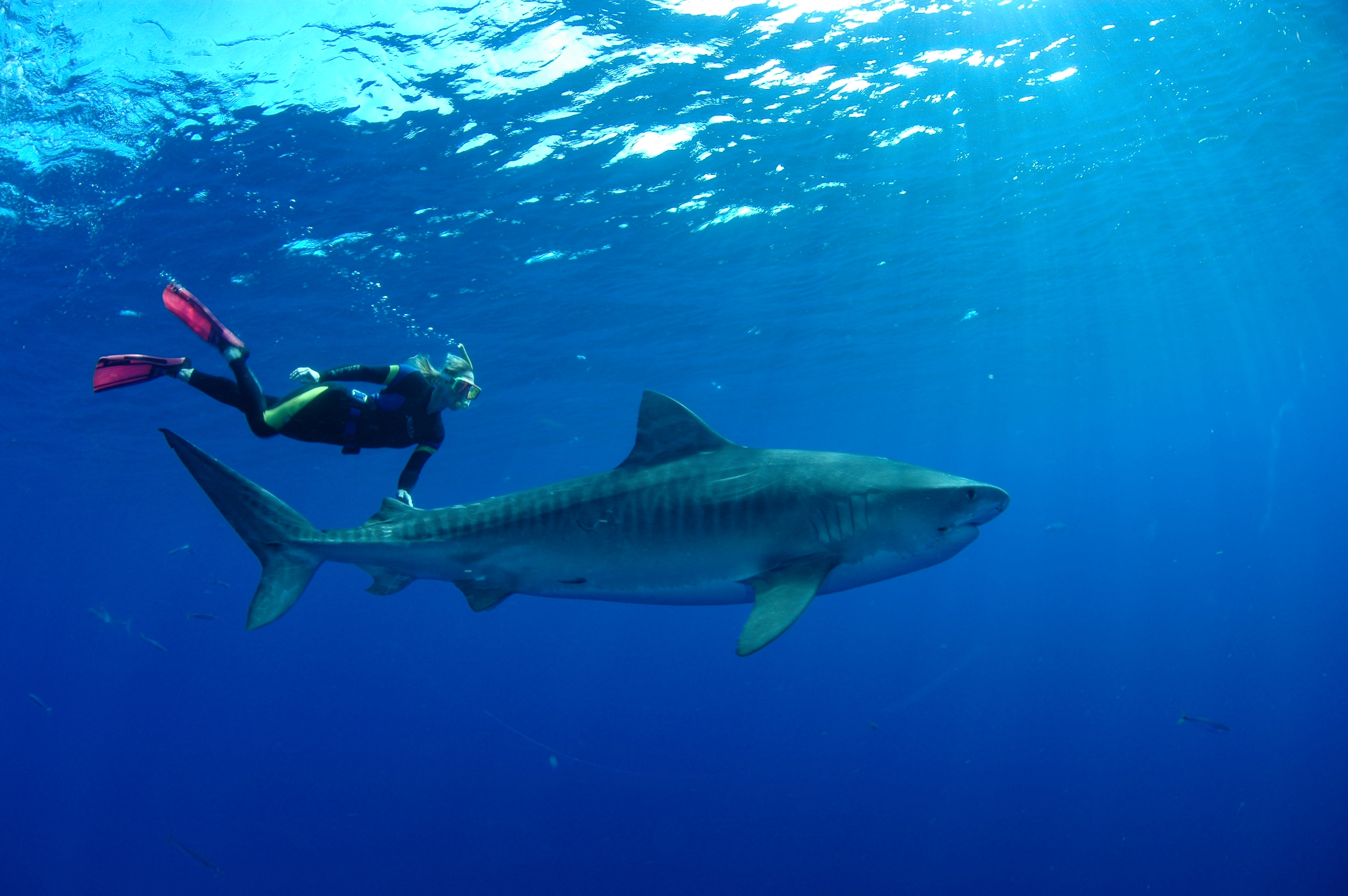 Woman swimming next to shark in water