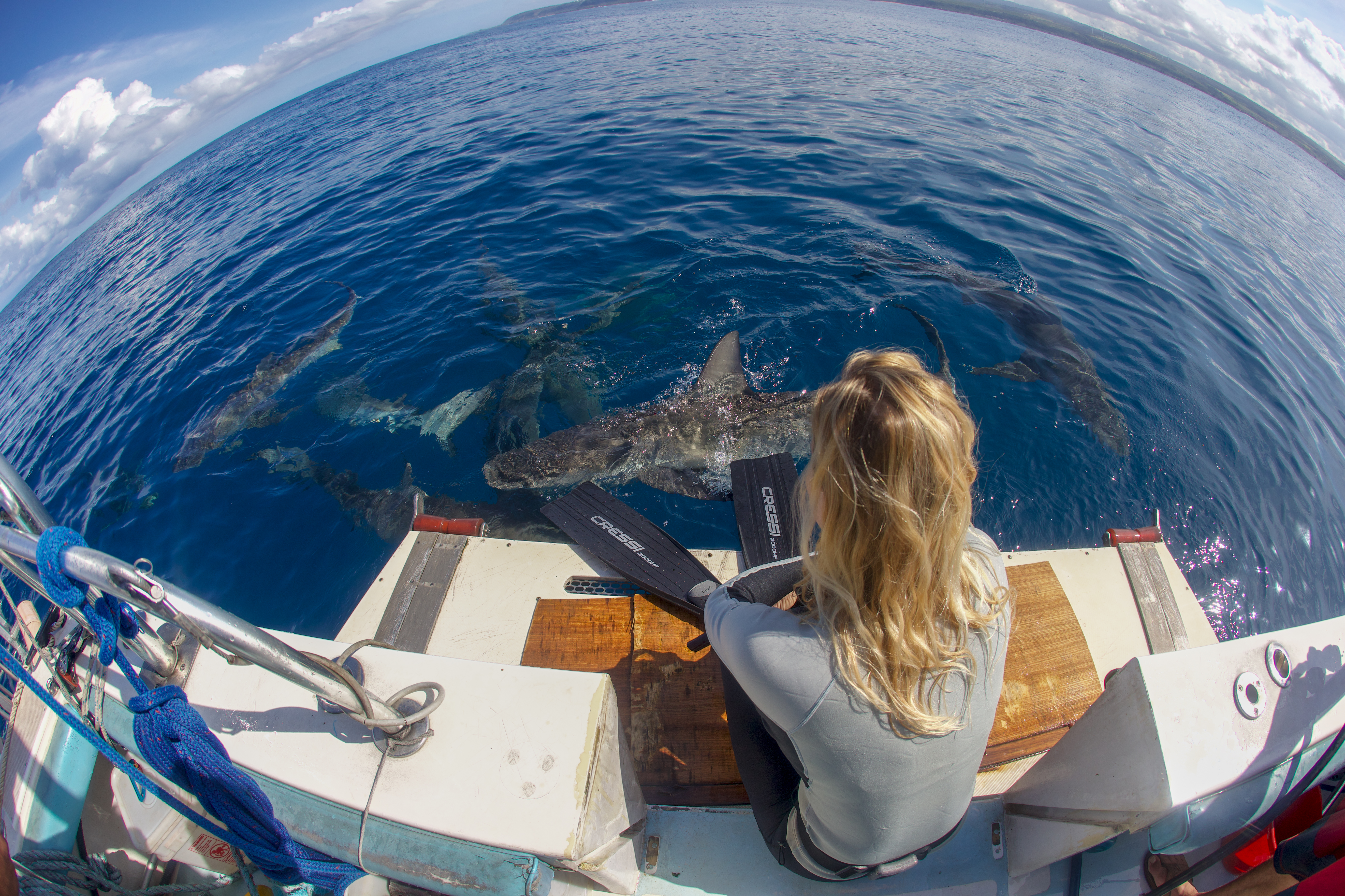 Woman sitting on edge of boat looking at sharks in water