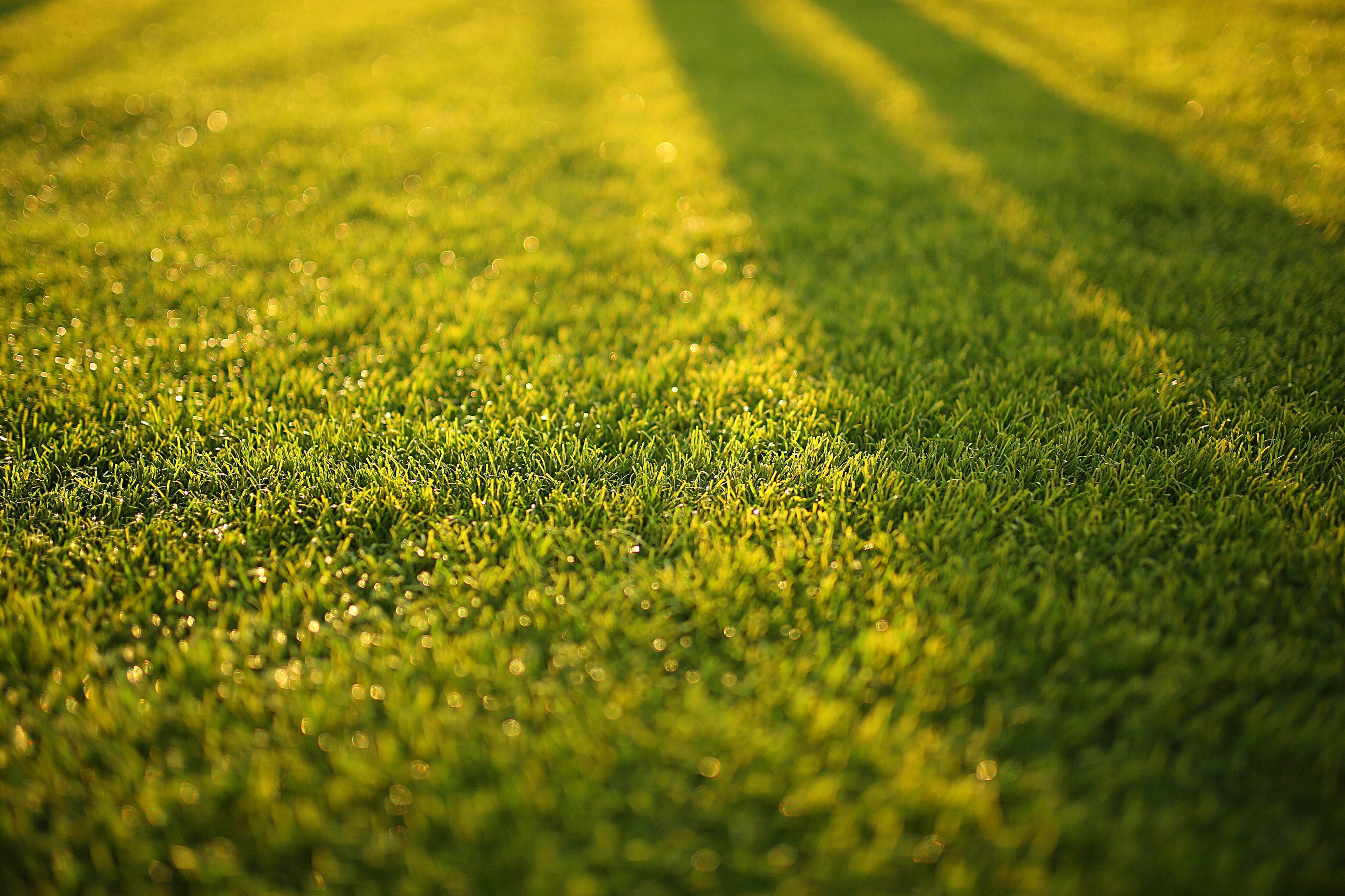 Sunlight reflecting on lawn