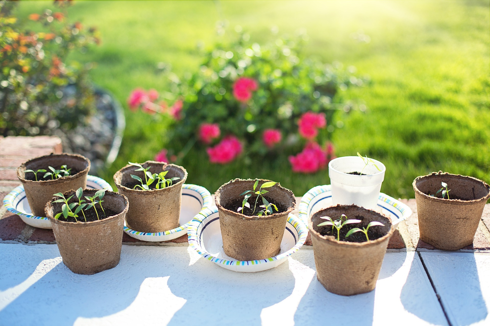 DIY Home sprouting kits