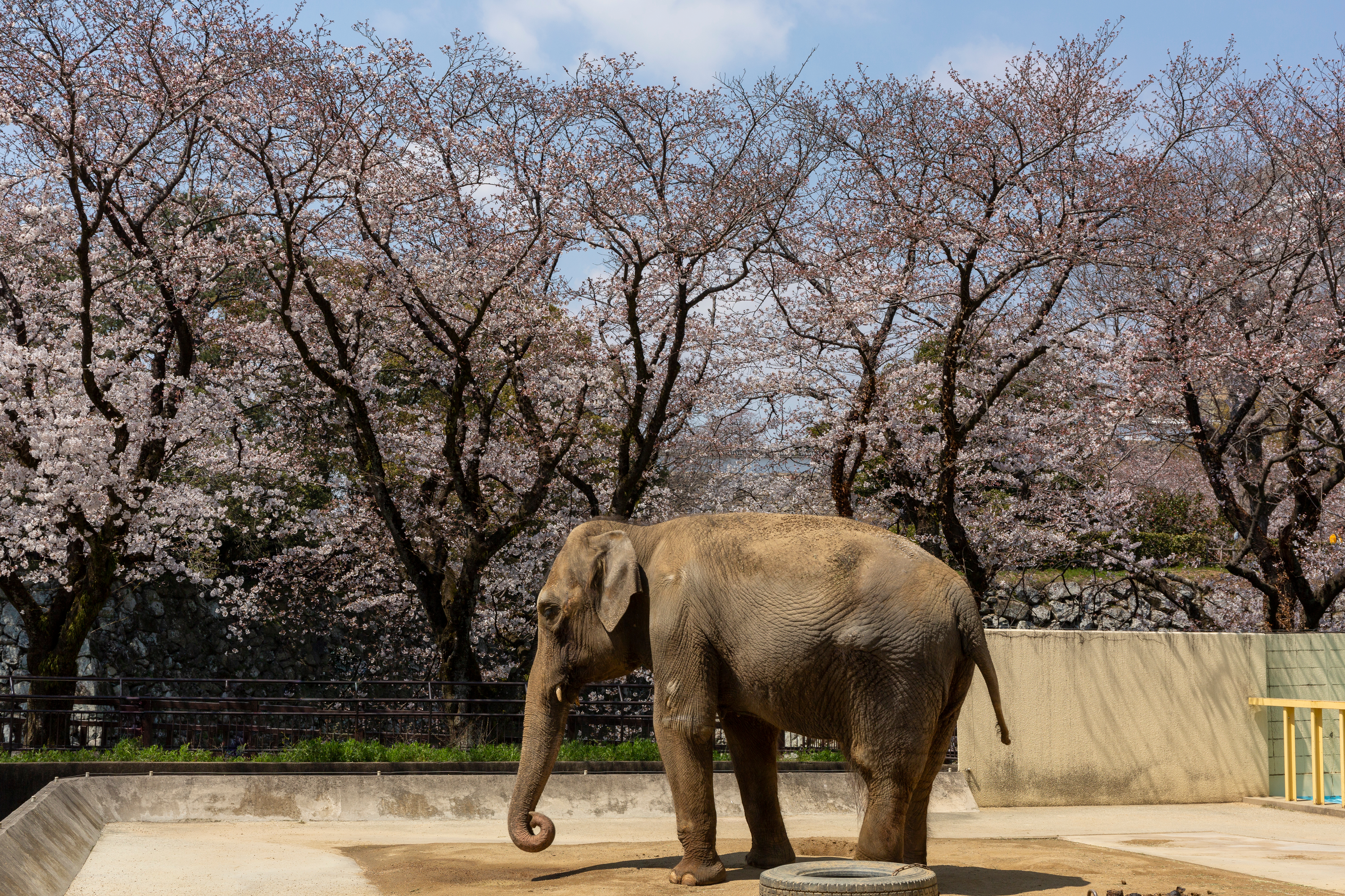 Petition: Save Himeko, Depressed Elephant Who's Been Alone in a Zoo for 24 Years