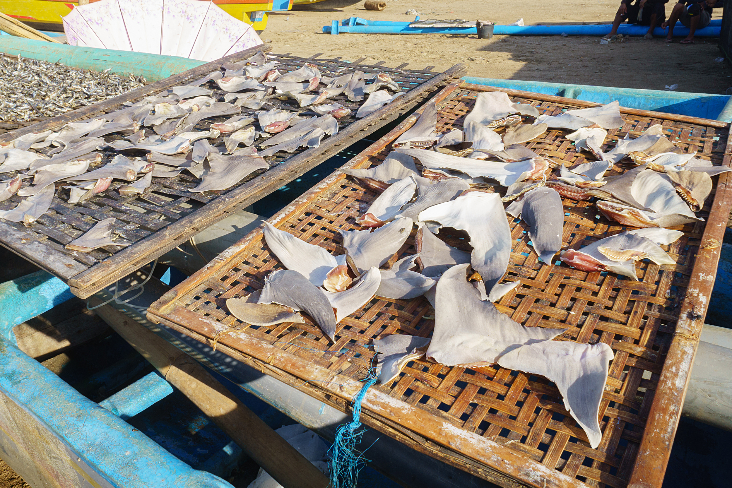 shark fins at a market