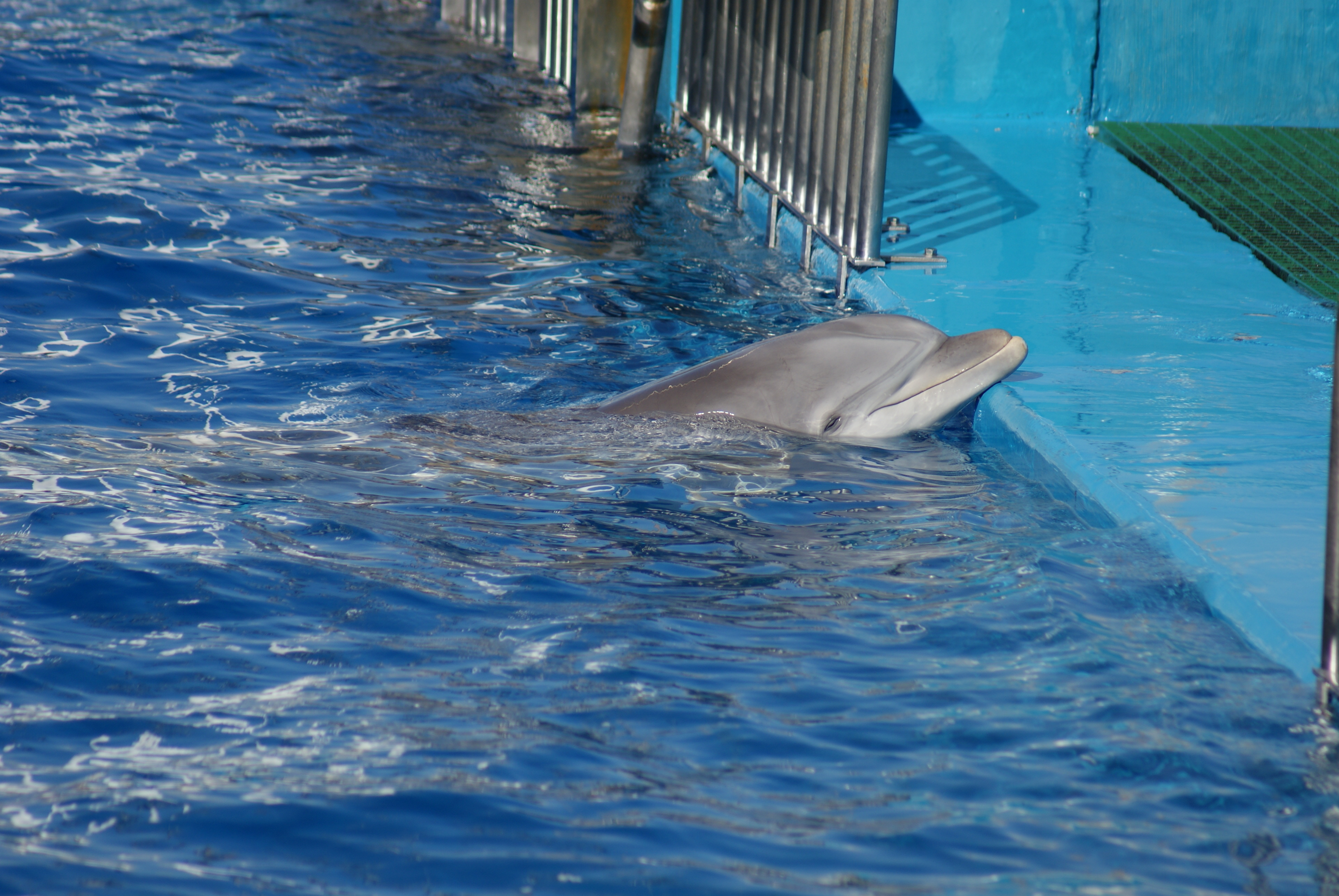 Captive dolphins at water park