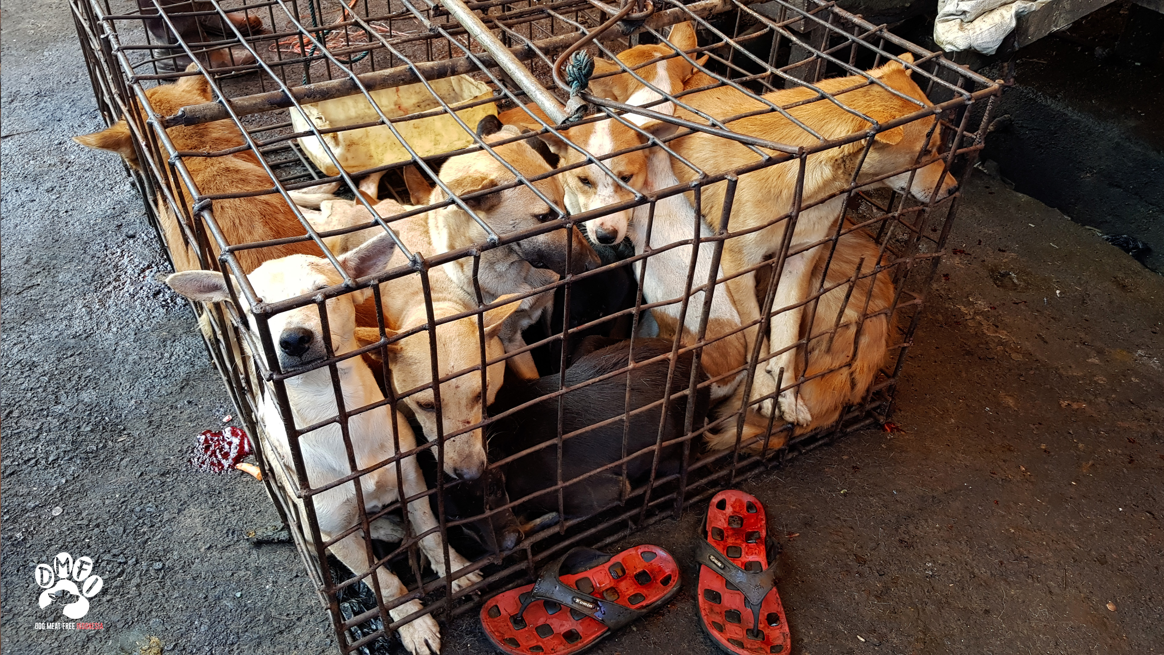 dog meat industry in Indonesia