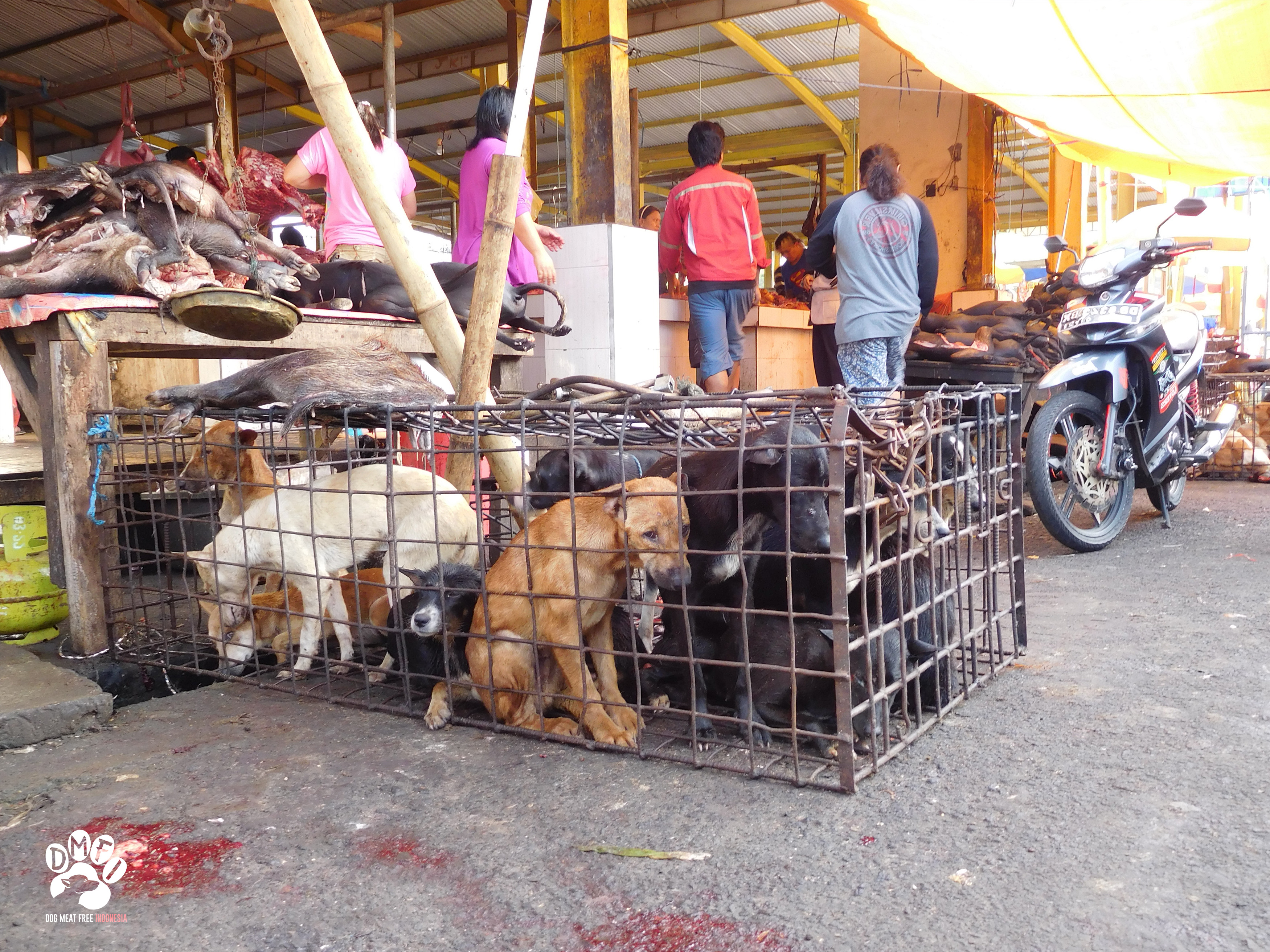 dog meat market in Indonesia