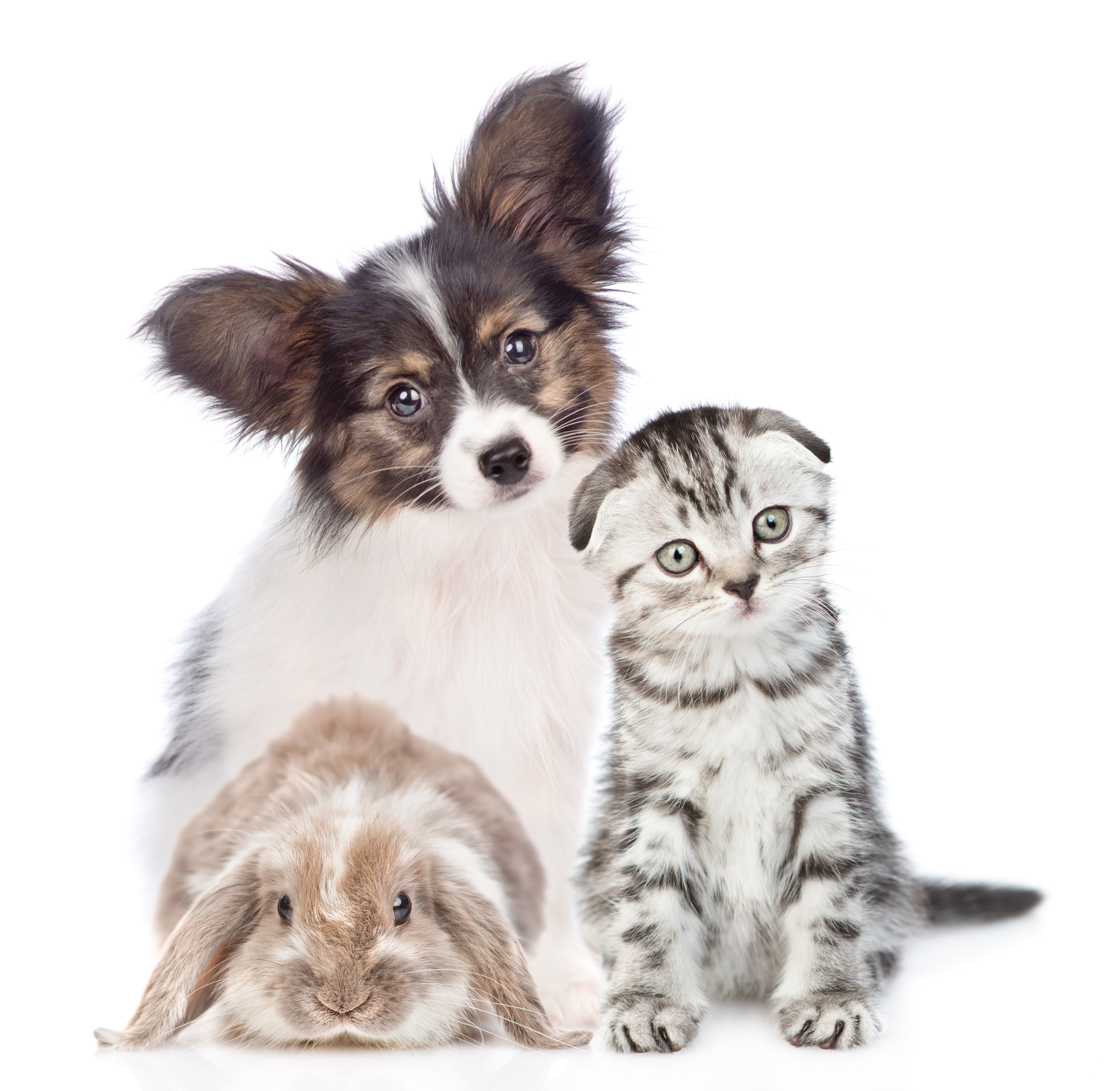 Bunny, puppy, and kitten