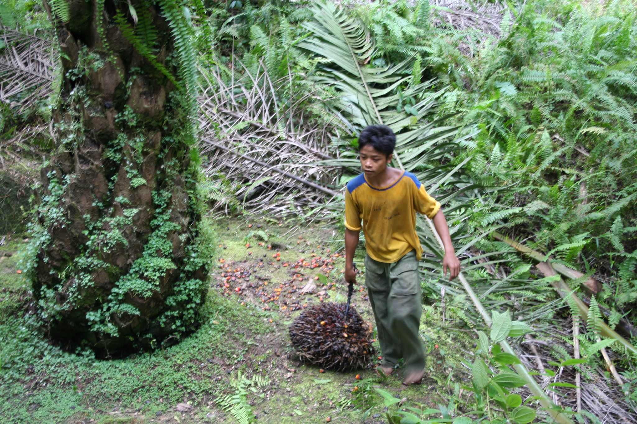 West Kalimantan boy in forest