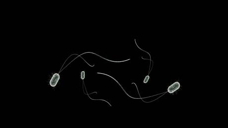 Probiotic cultures