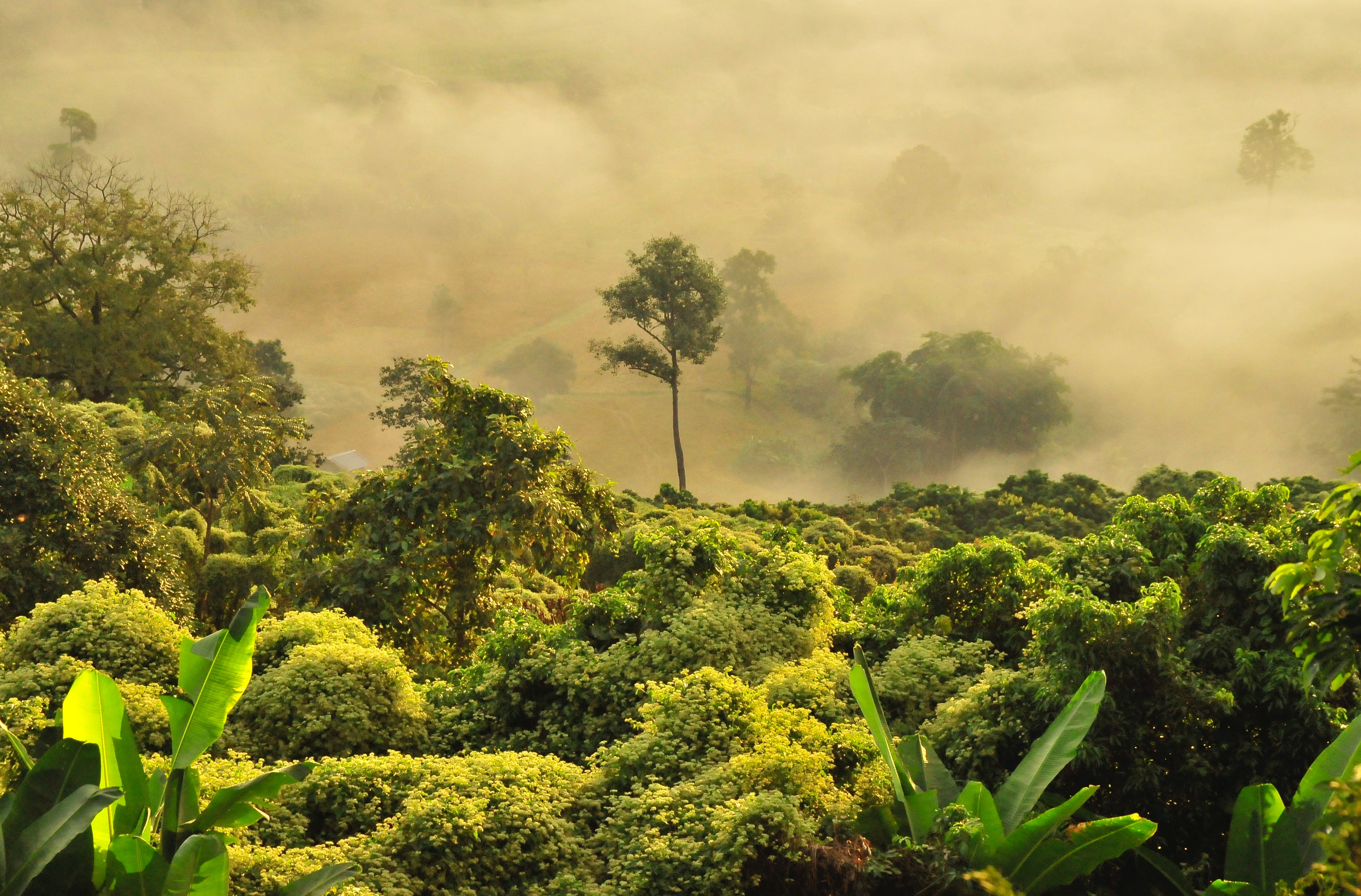 Picture of Trees in Jungle