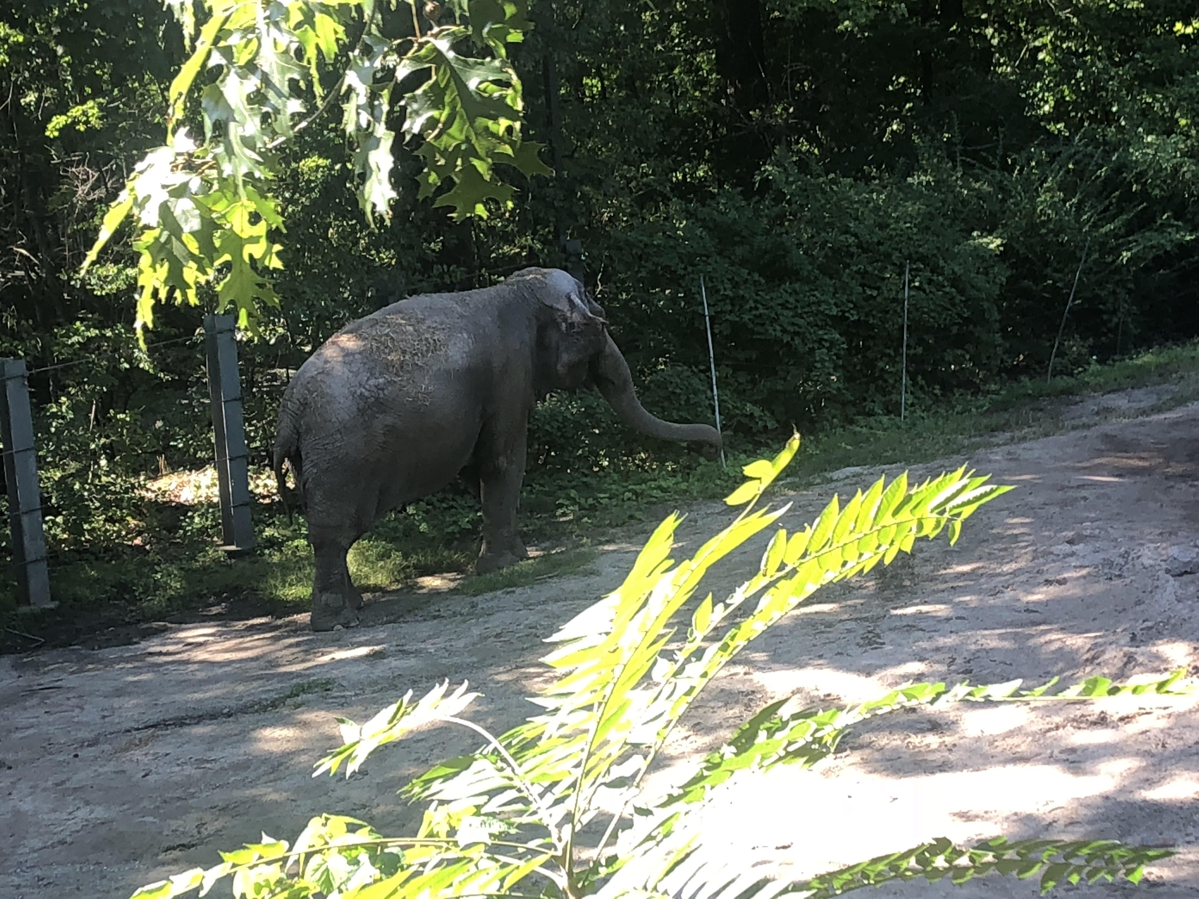 Elephant Happy at Bronx Zoo