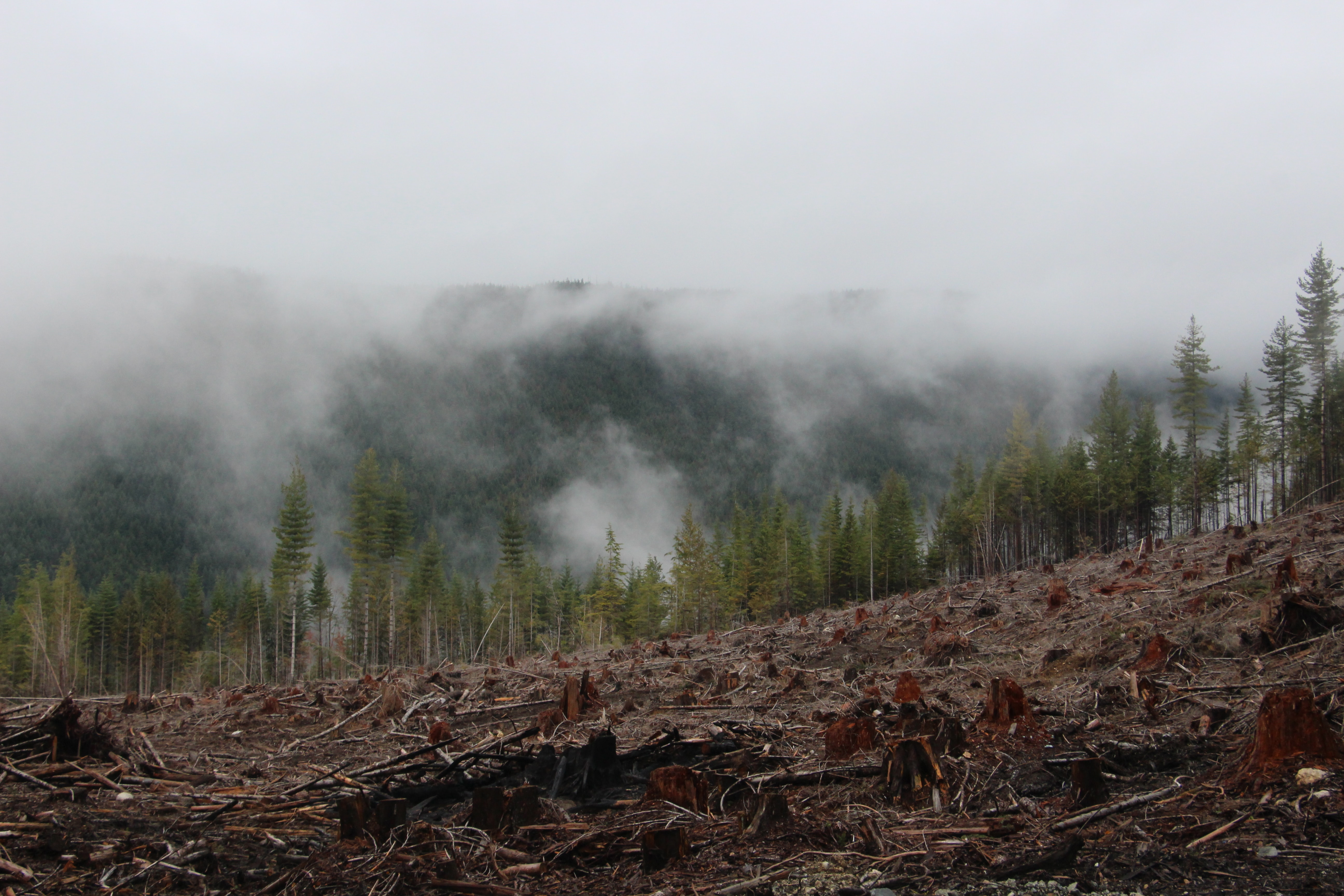 Deforested Amazon rainforest with smoke