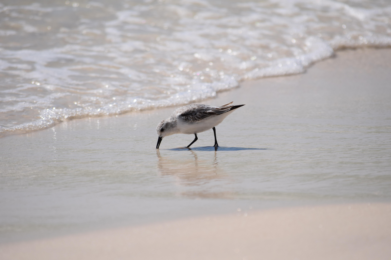 Bird in the sand along the seashore