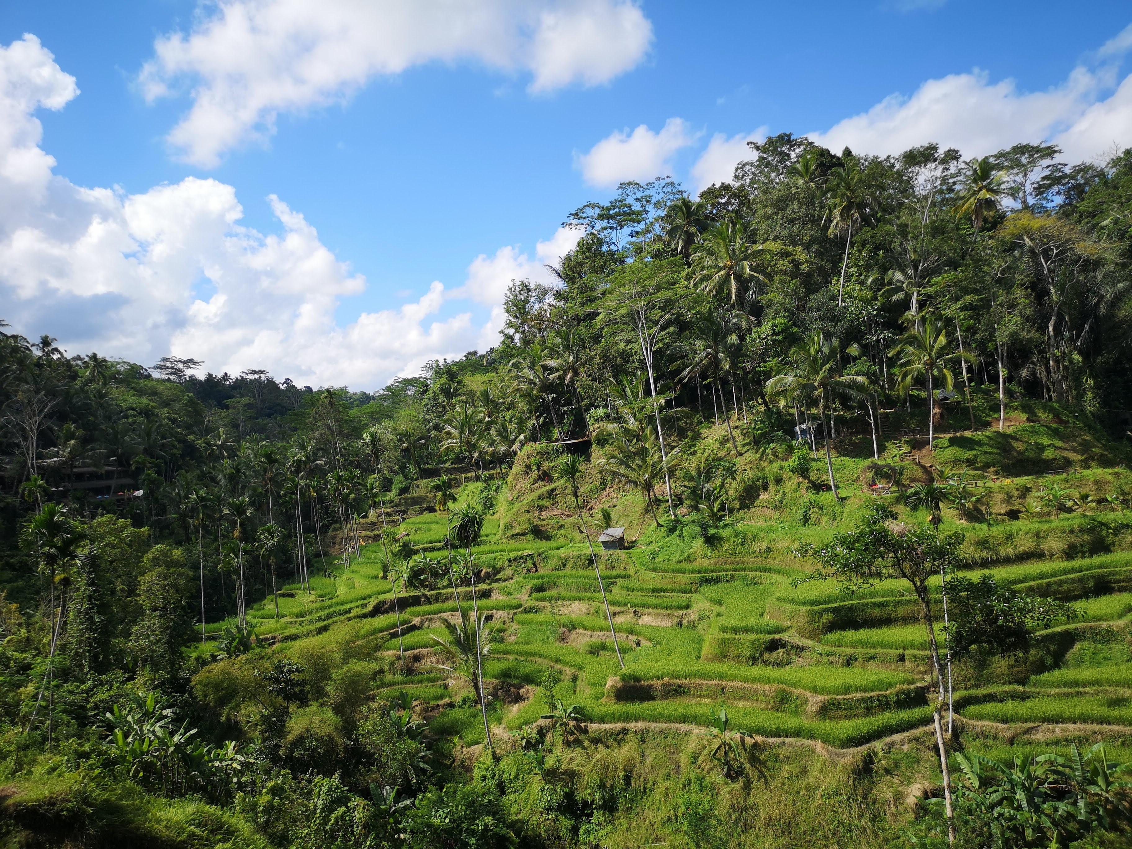 Indonesian Jungles
