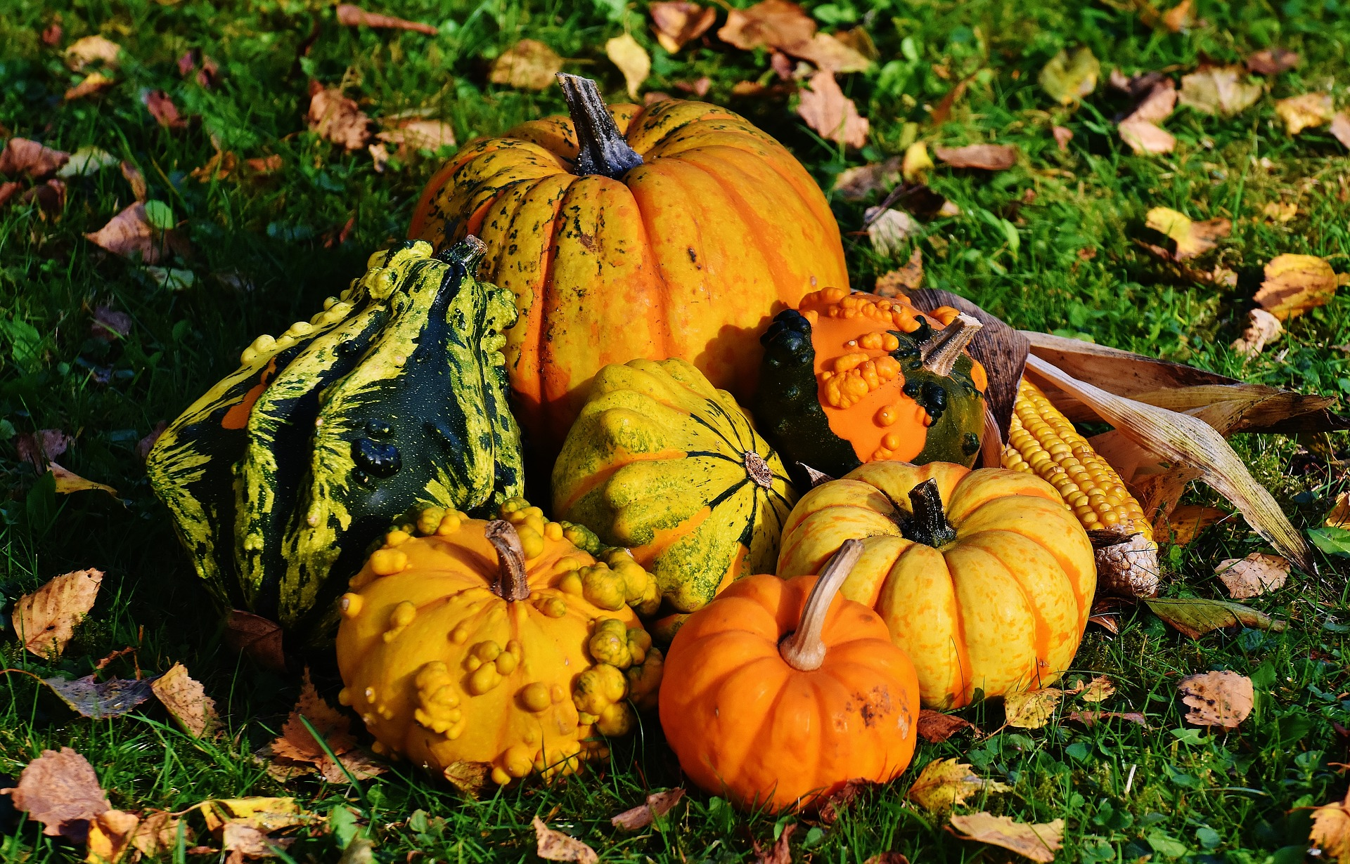 Buttercup, Turban, Lakota, Carnival: The Health Benefits of Lesser Known Fall Squash (Including Recipes!)