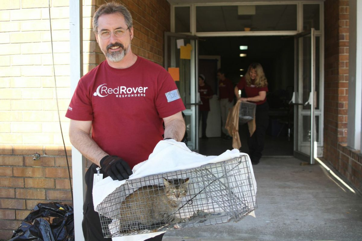 RedRover responder rescuing a cat