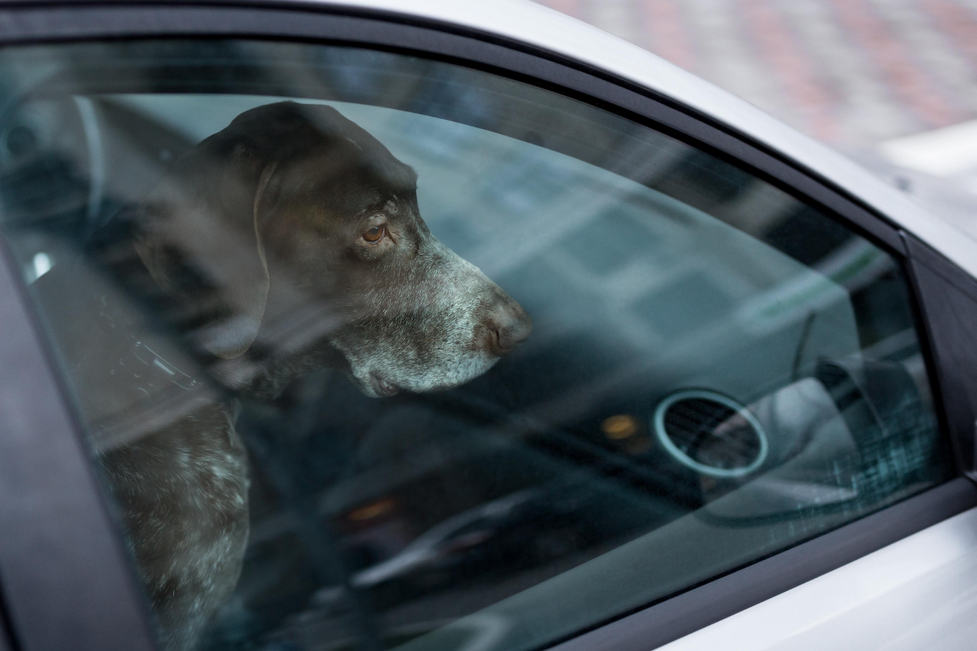 sad dog alone in car