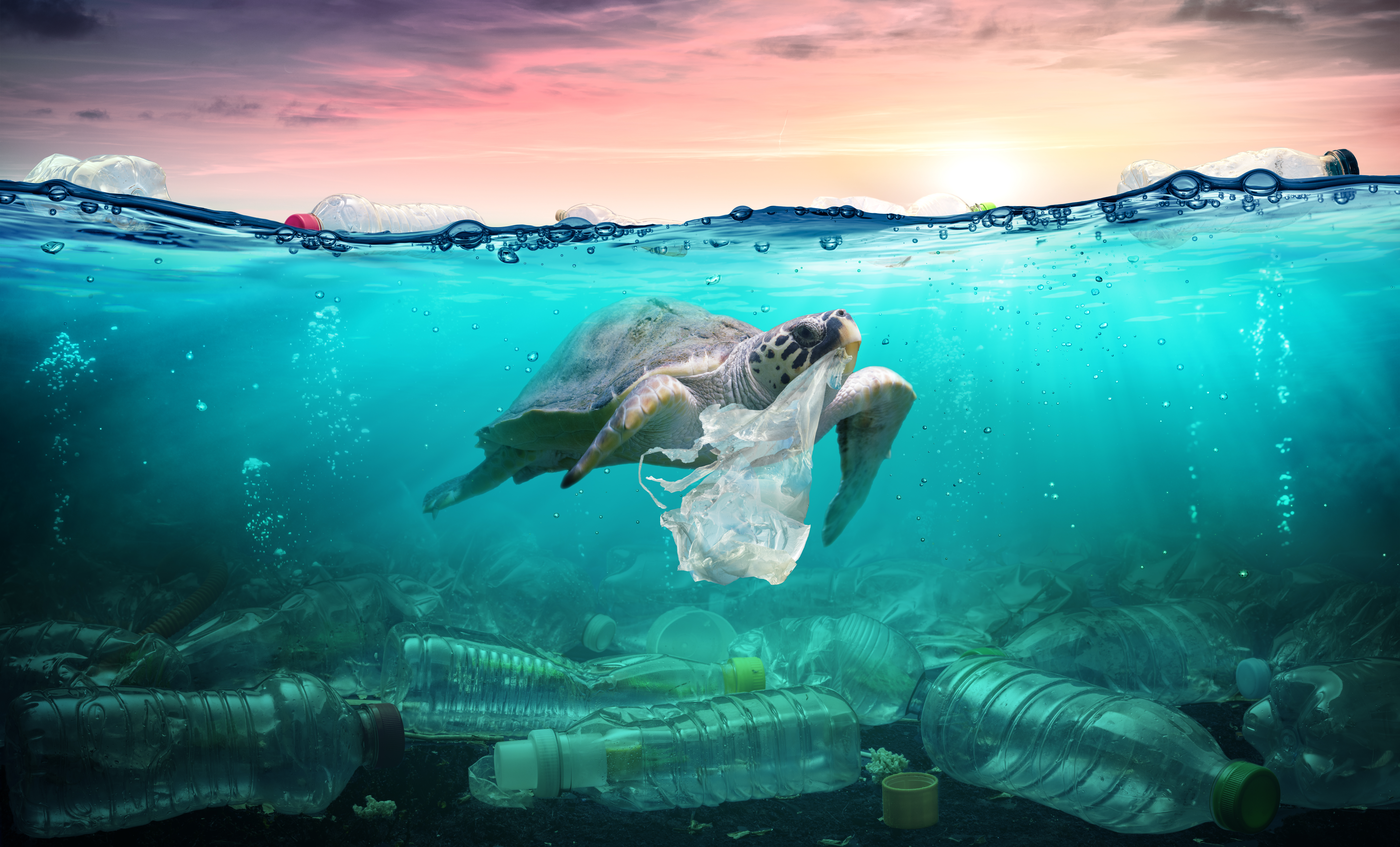 Sea turtle in ocean surrounded by plastic pollution
