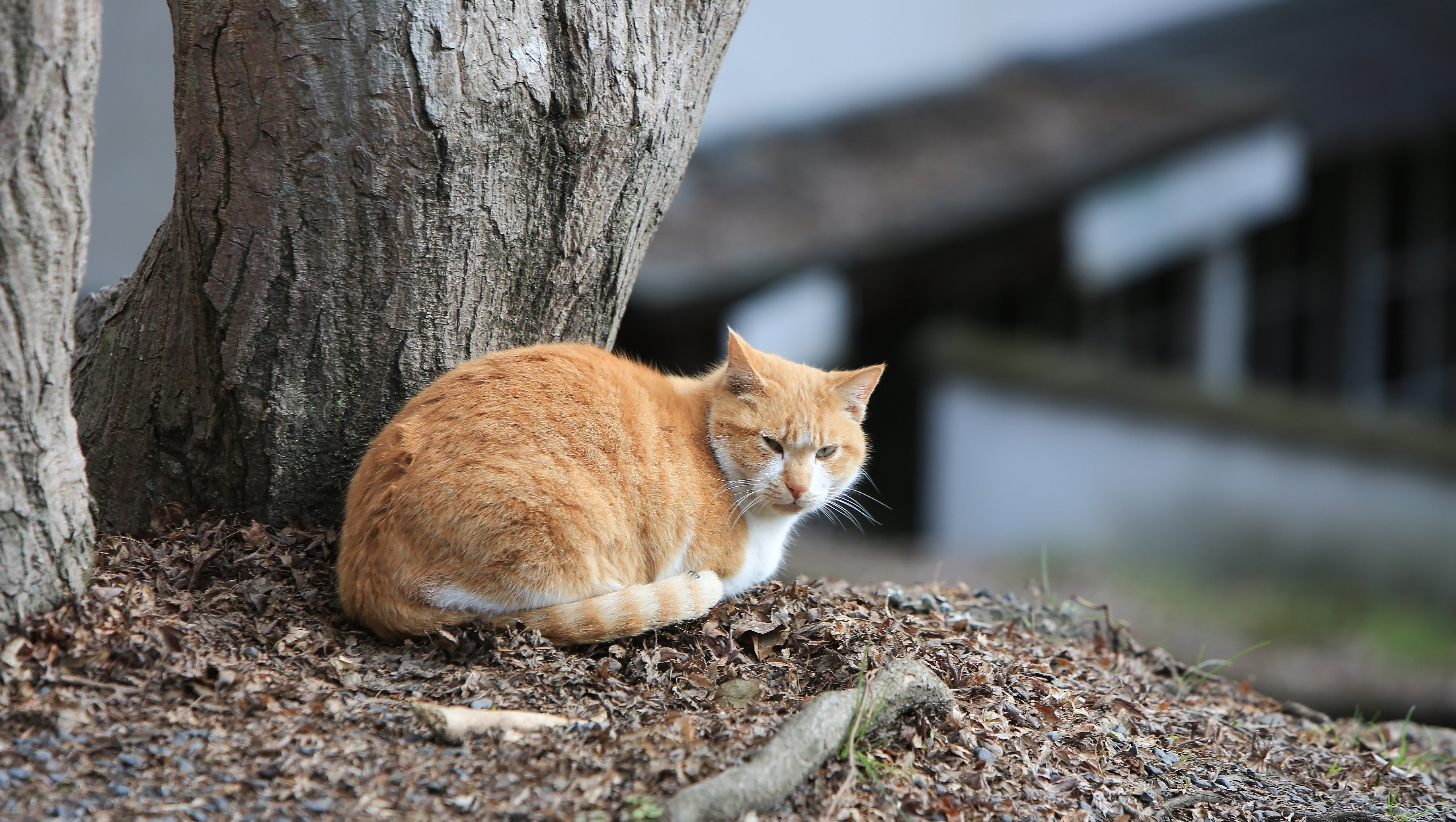 Cat leaning against tree in Japan