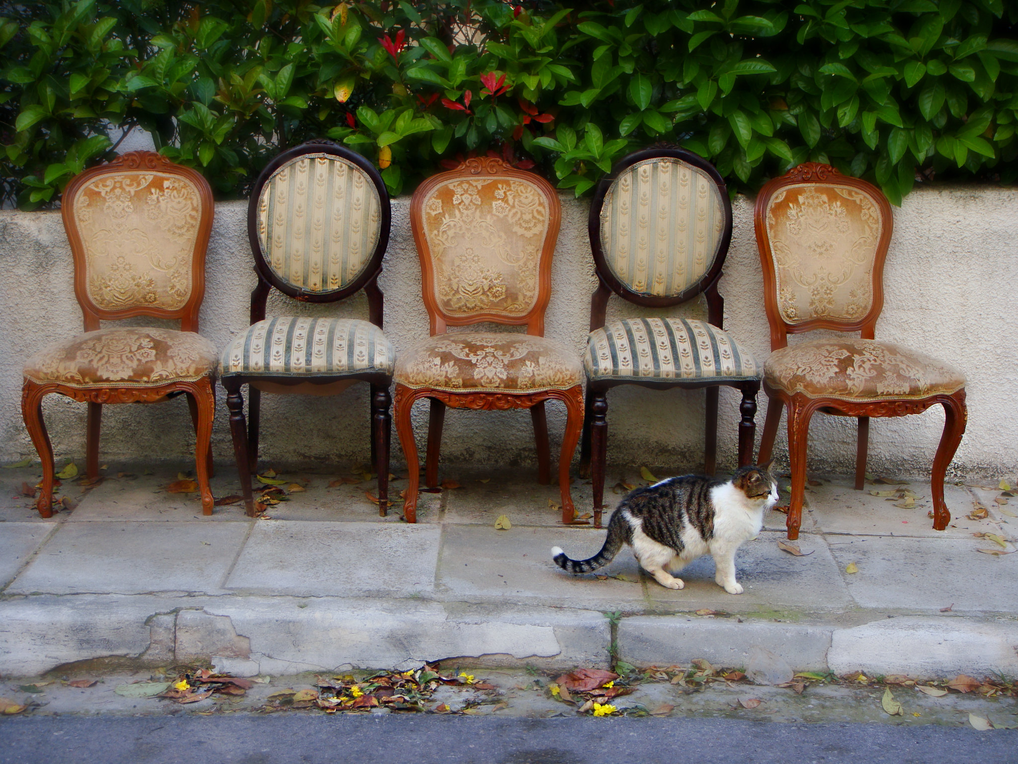 five old chairs and a cat