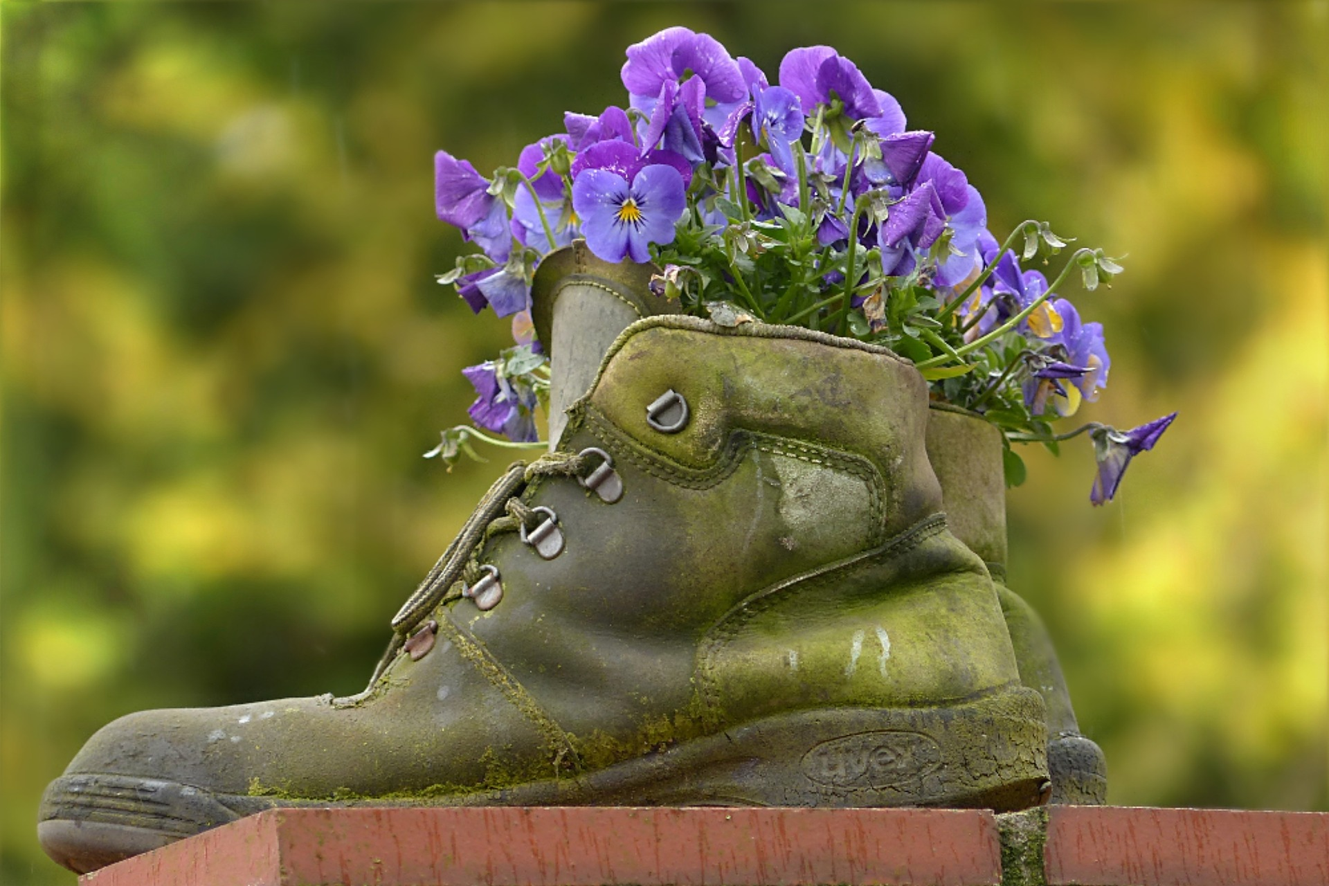 old shoes being used as vase
