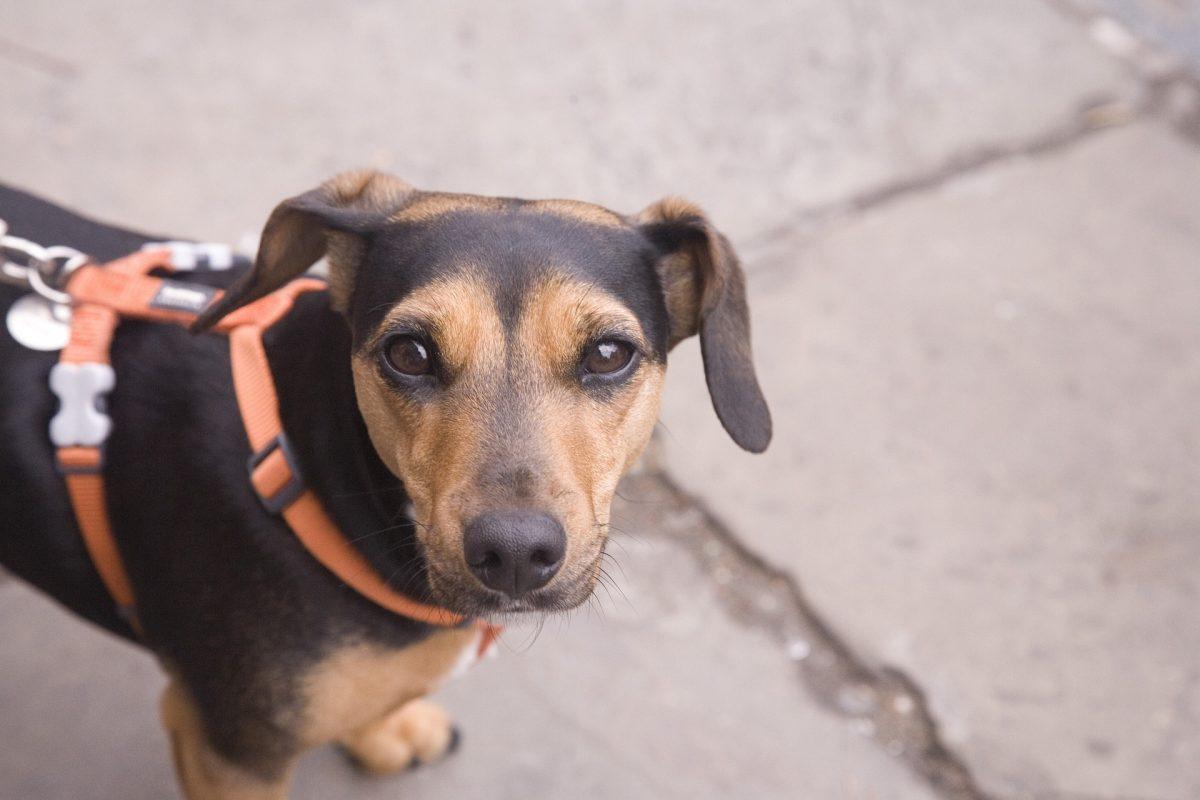 Portrait of a dog on a walk