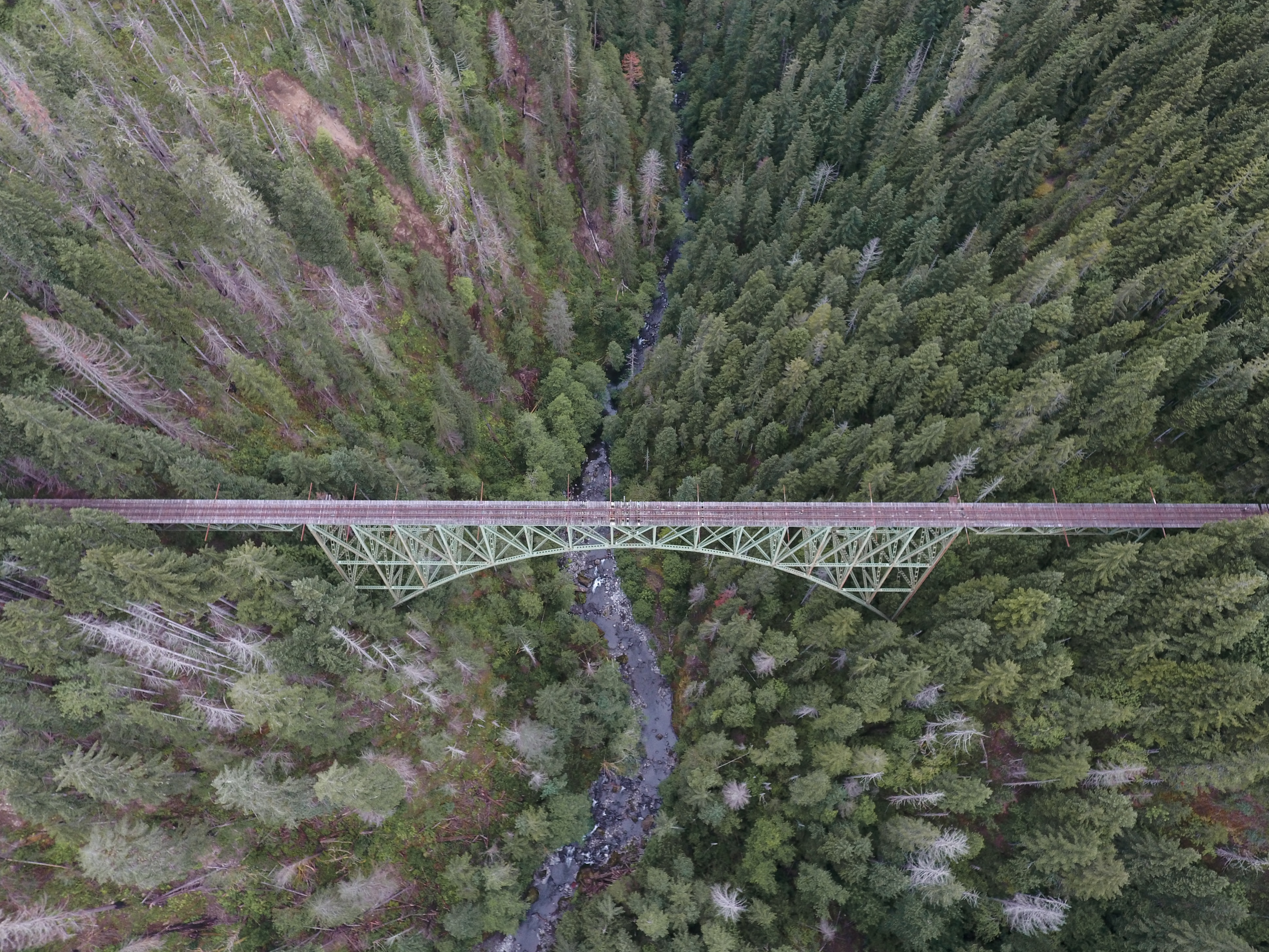 Forest with Bridge Over Top