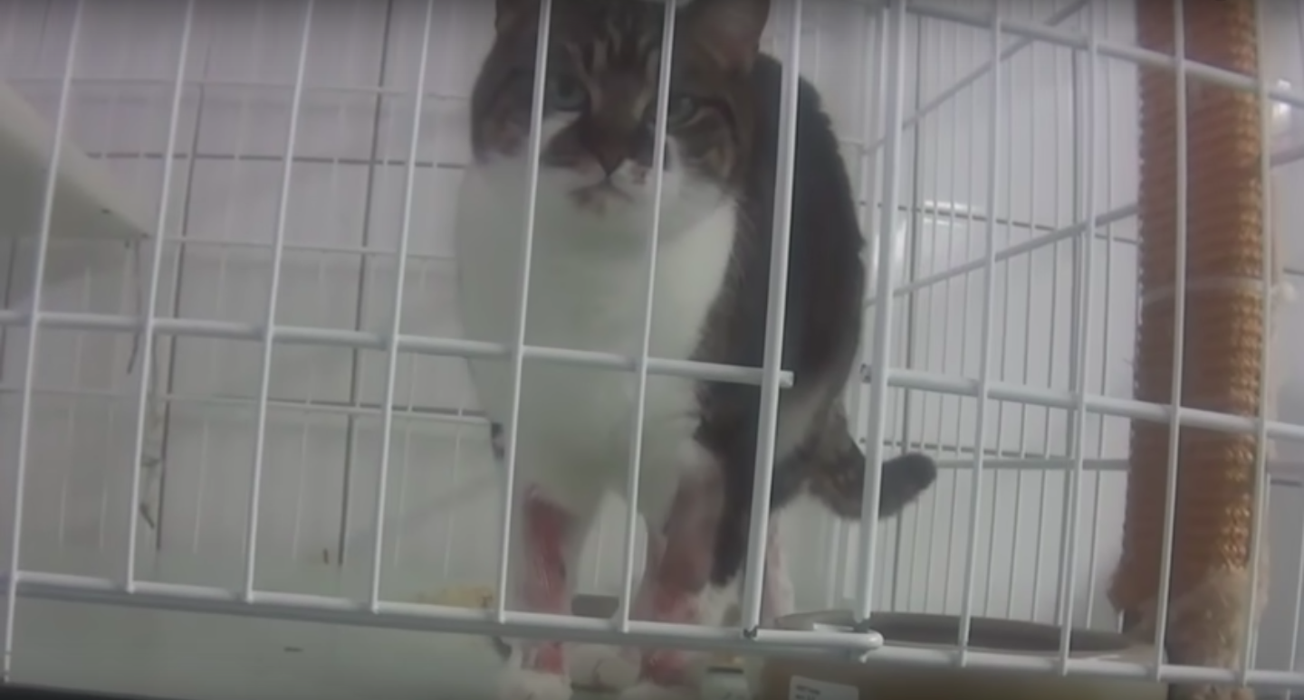 bloodied and bruised cat in cage