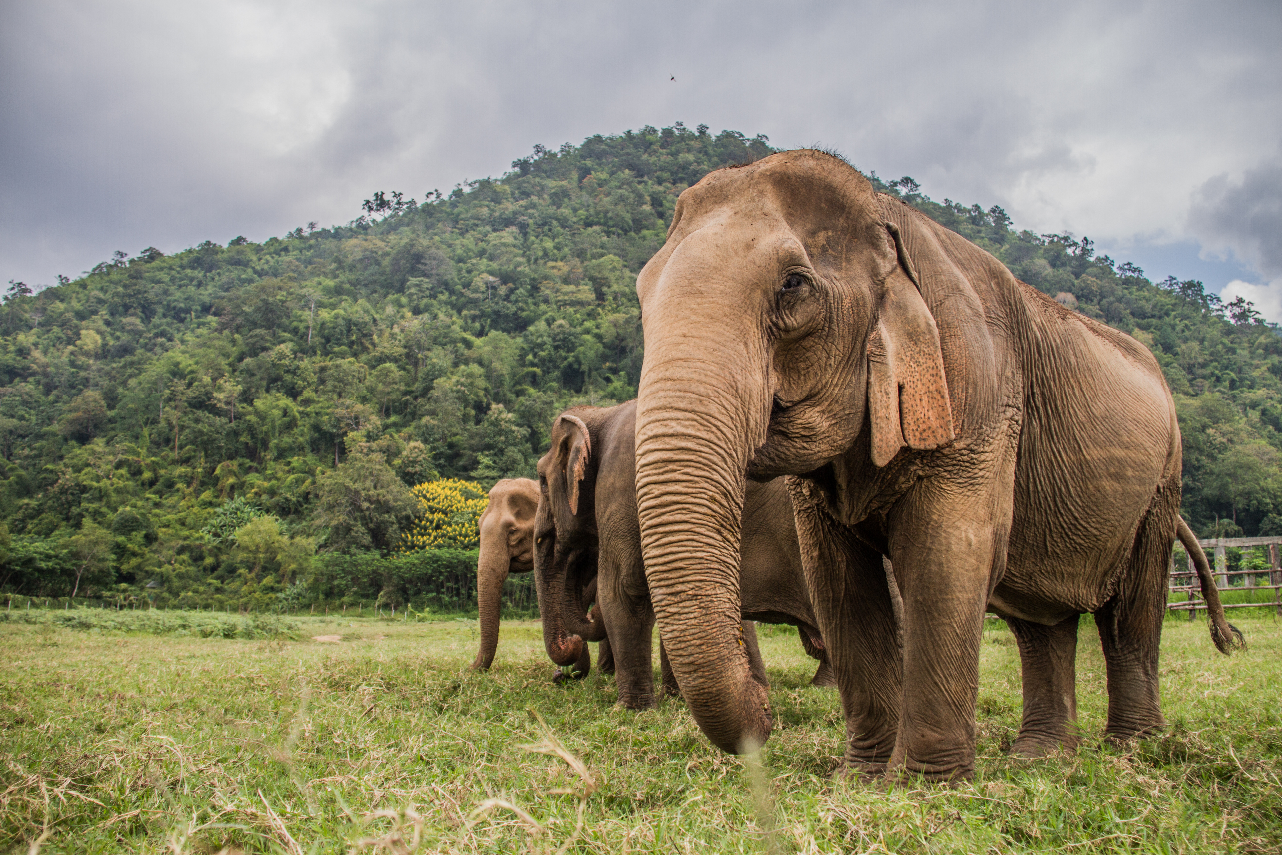 Petition: Ask the UN to Protect Asian Elephants From Being Poached for Jewelry!