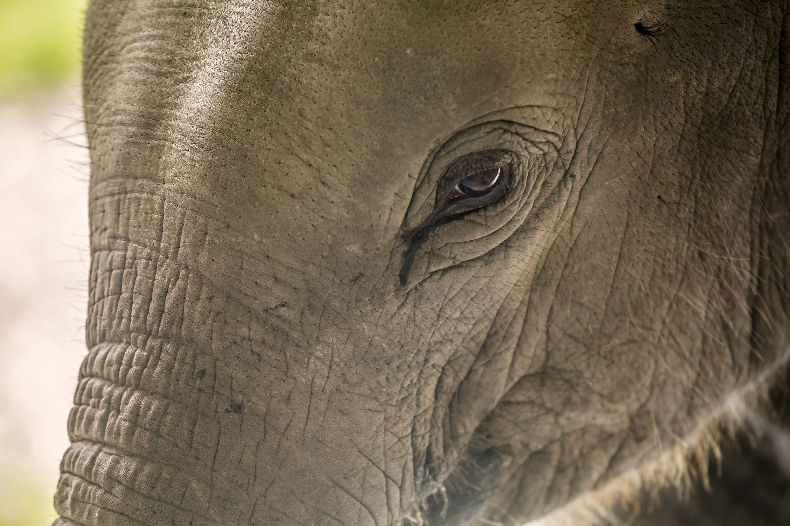 Petition: Save Last Remaining Elephant at Zoo Where Two Elephants Died in the Last Year!