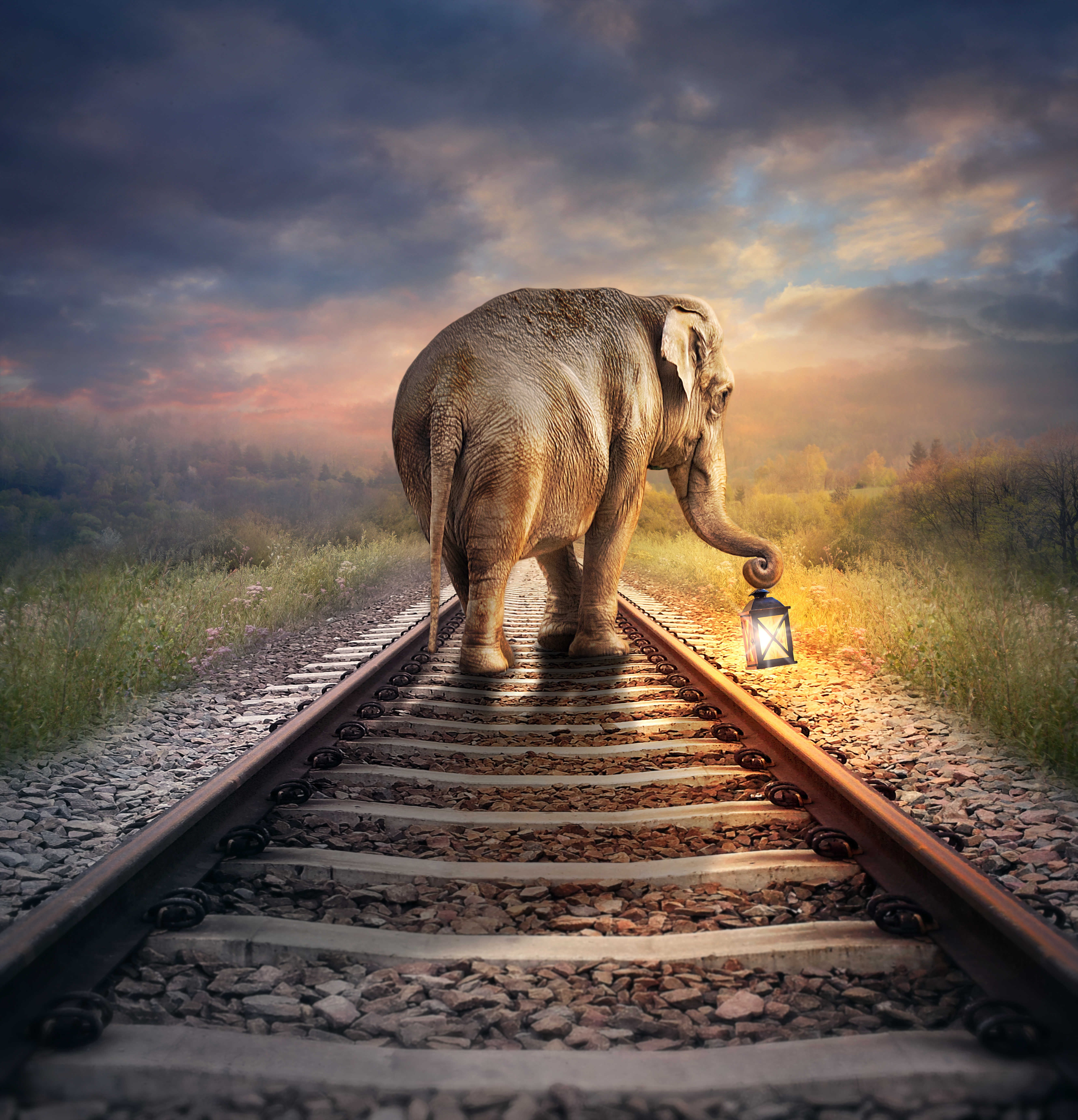 Petition: Protect Elephants in India From Being Struck by Trains