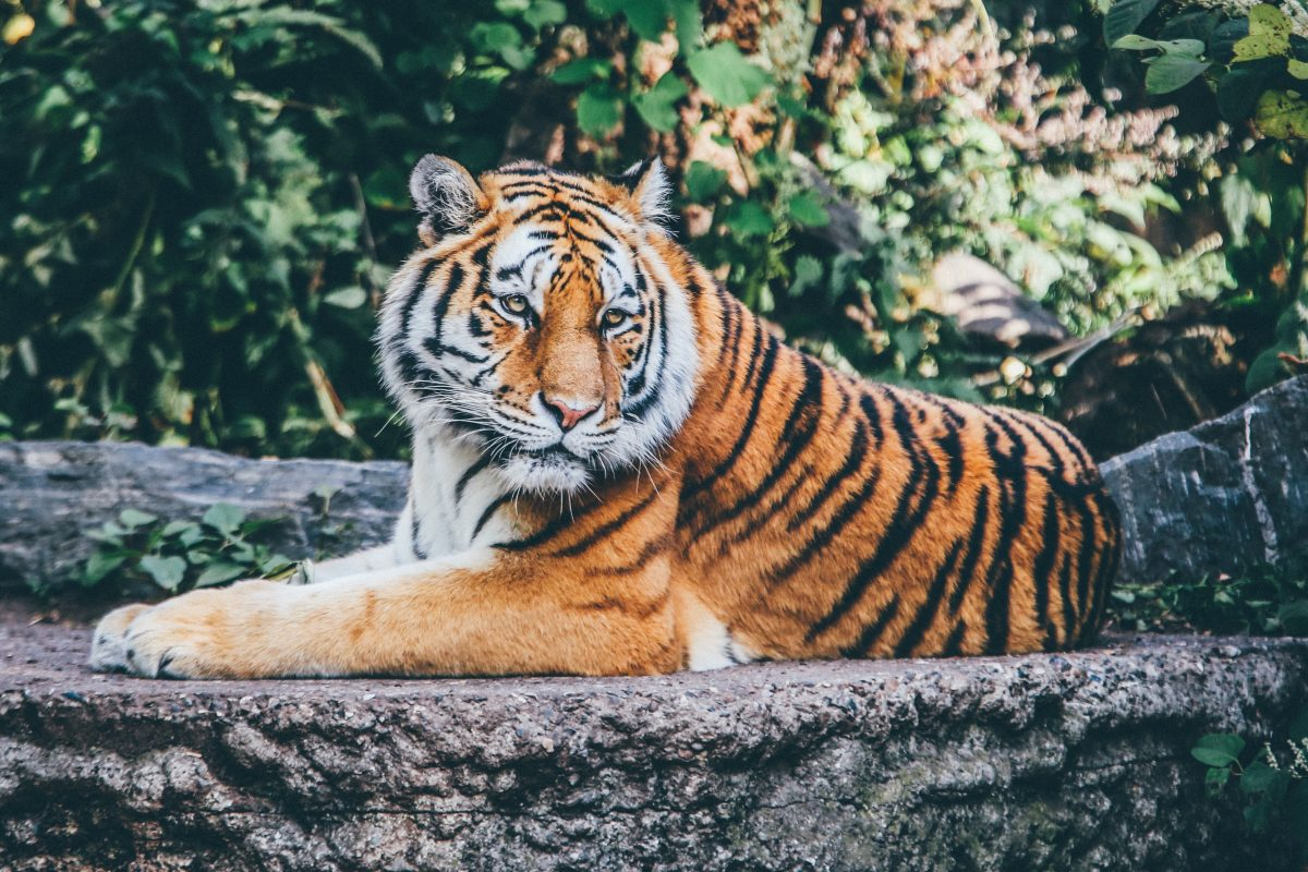Paris Bans Wild Animals in Circuses! - One Green Planet