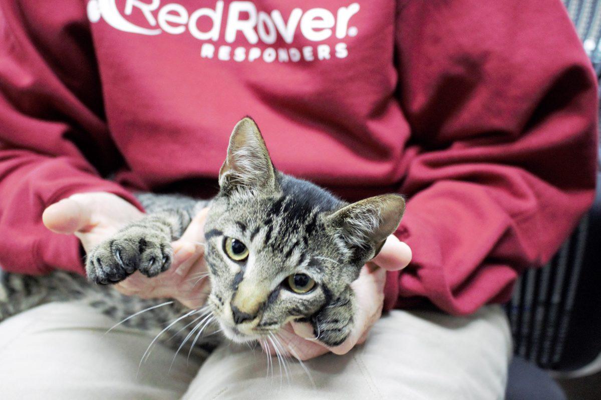 RedRover responder holding a cat