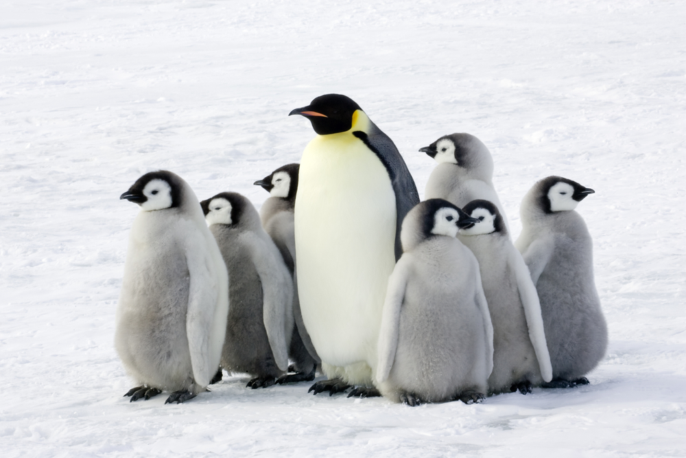 Petition: Protect Emperor Penguins From Extinction