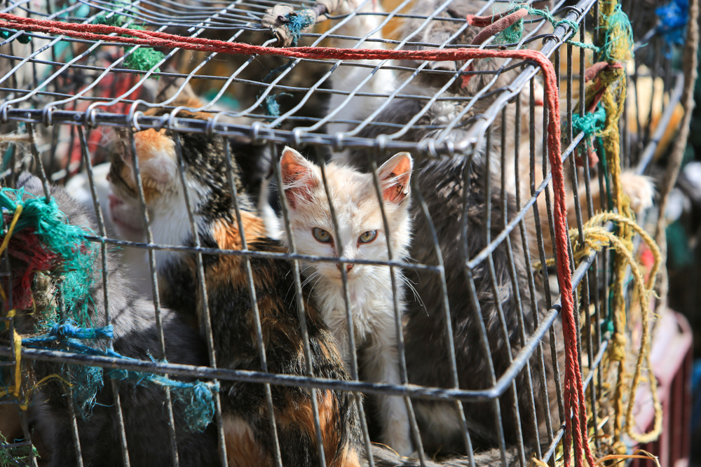 cats crammed in a cage