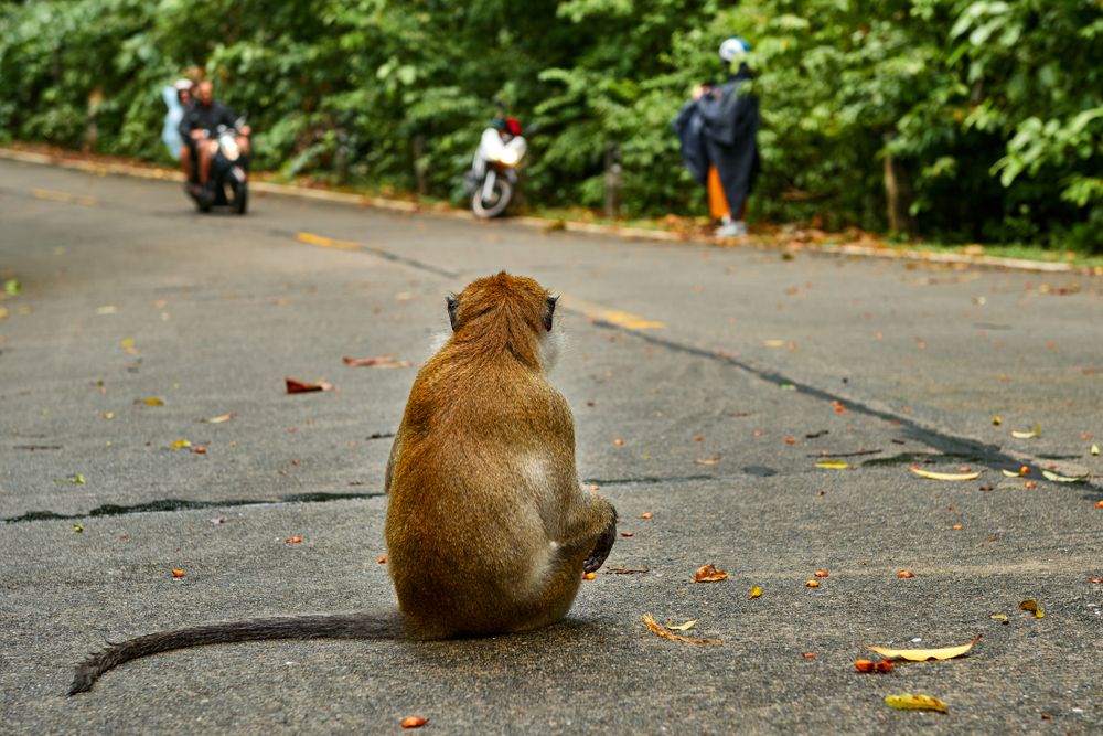 Monkey on street