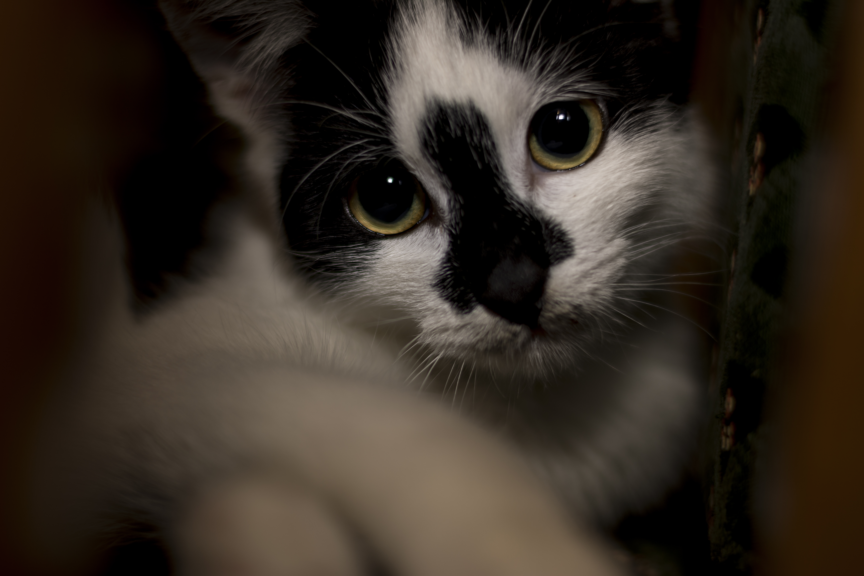 sad black and white cat