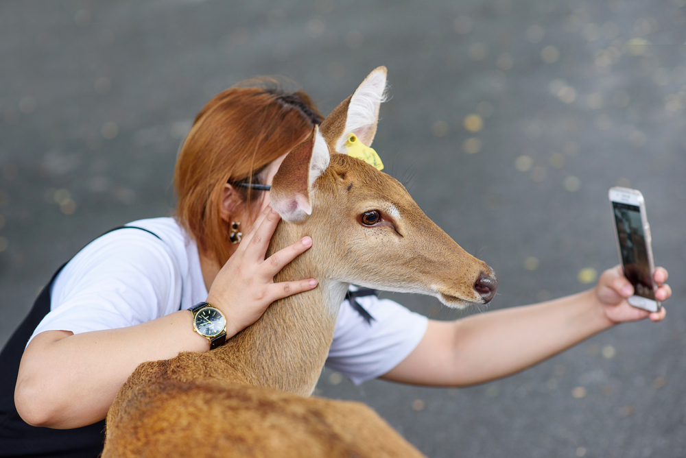 Costa Rica Takes Action Against Wild Animal Selfies