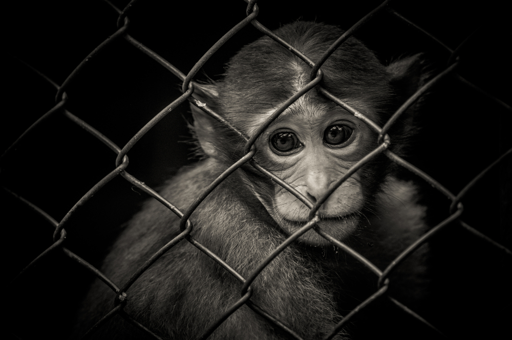 Petition: End Deadly Primate Testing in the University of California at Davis!