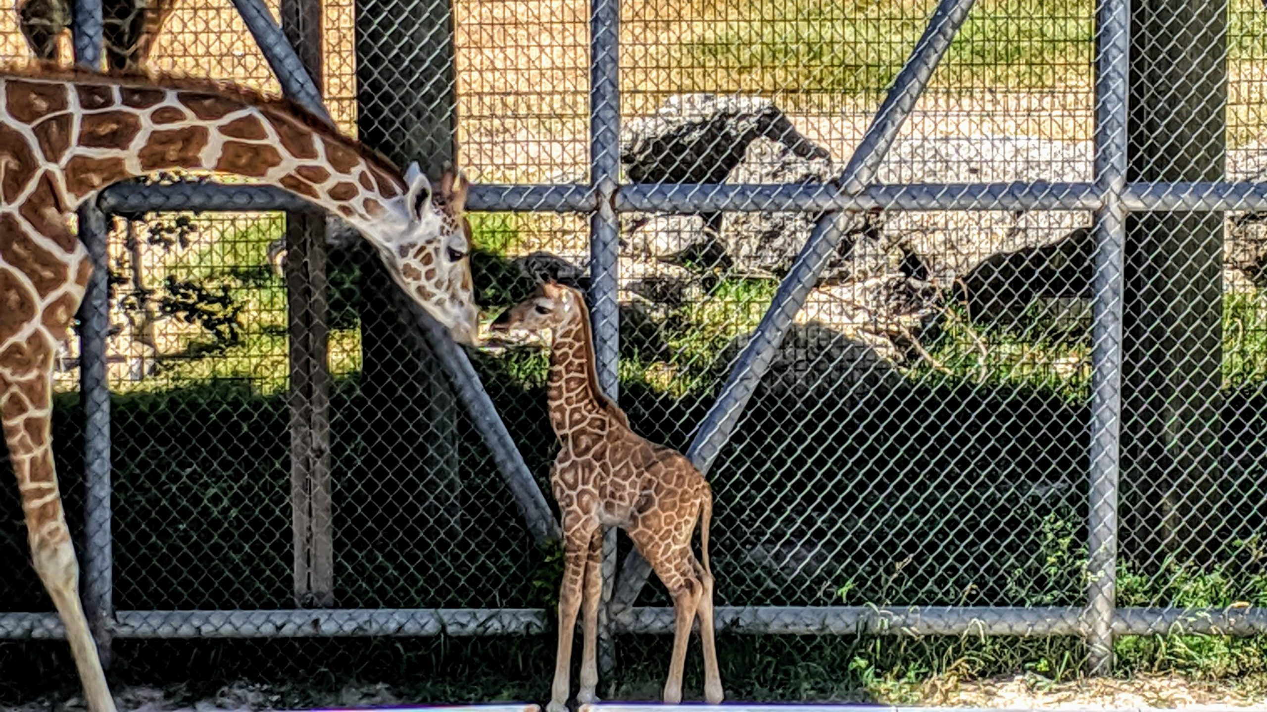 Why We Need to Boycott Zoos in 2020!