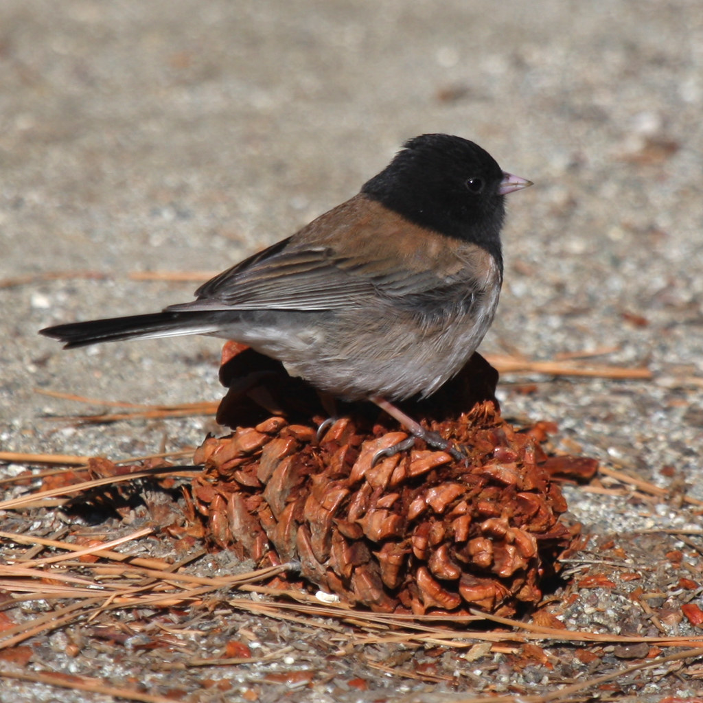 small bird sitting on pine cone
