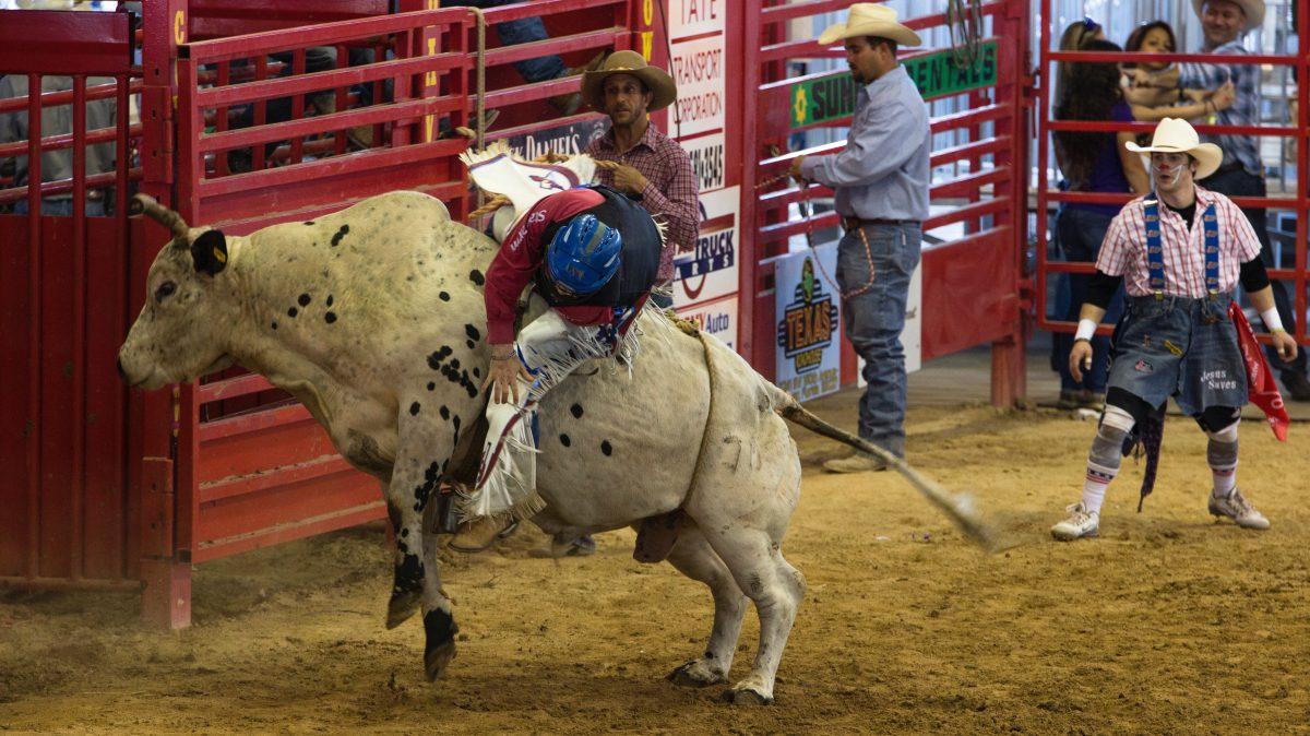 Rodeo Bull Mistreatment