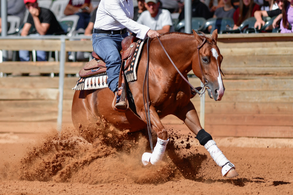 Cowboy riding horse during rodeo