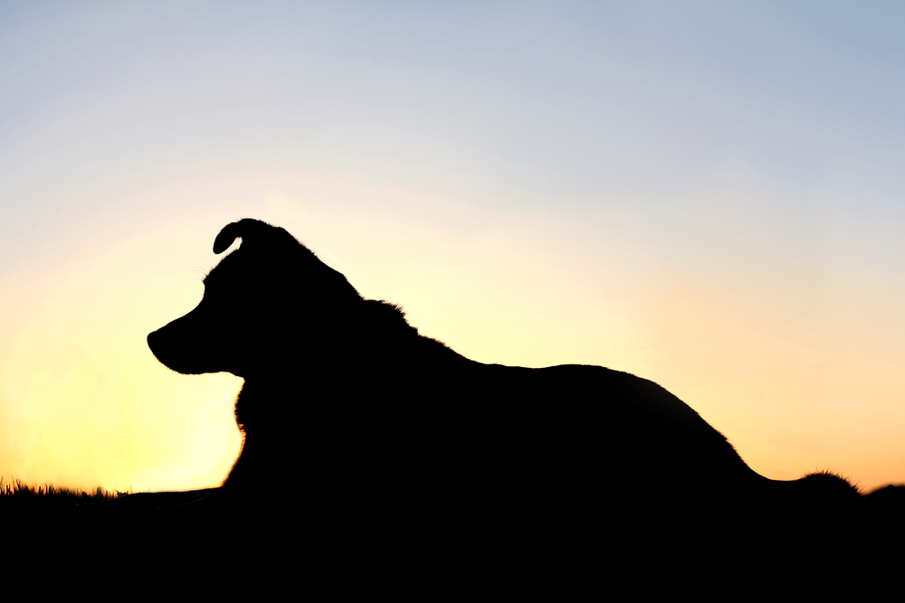 Silhouette of dog laying down